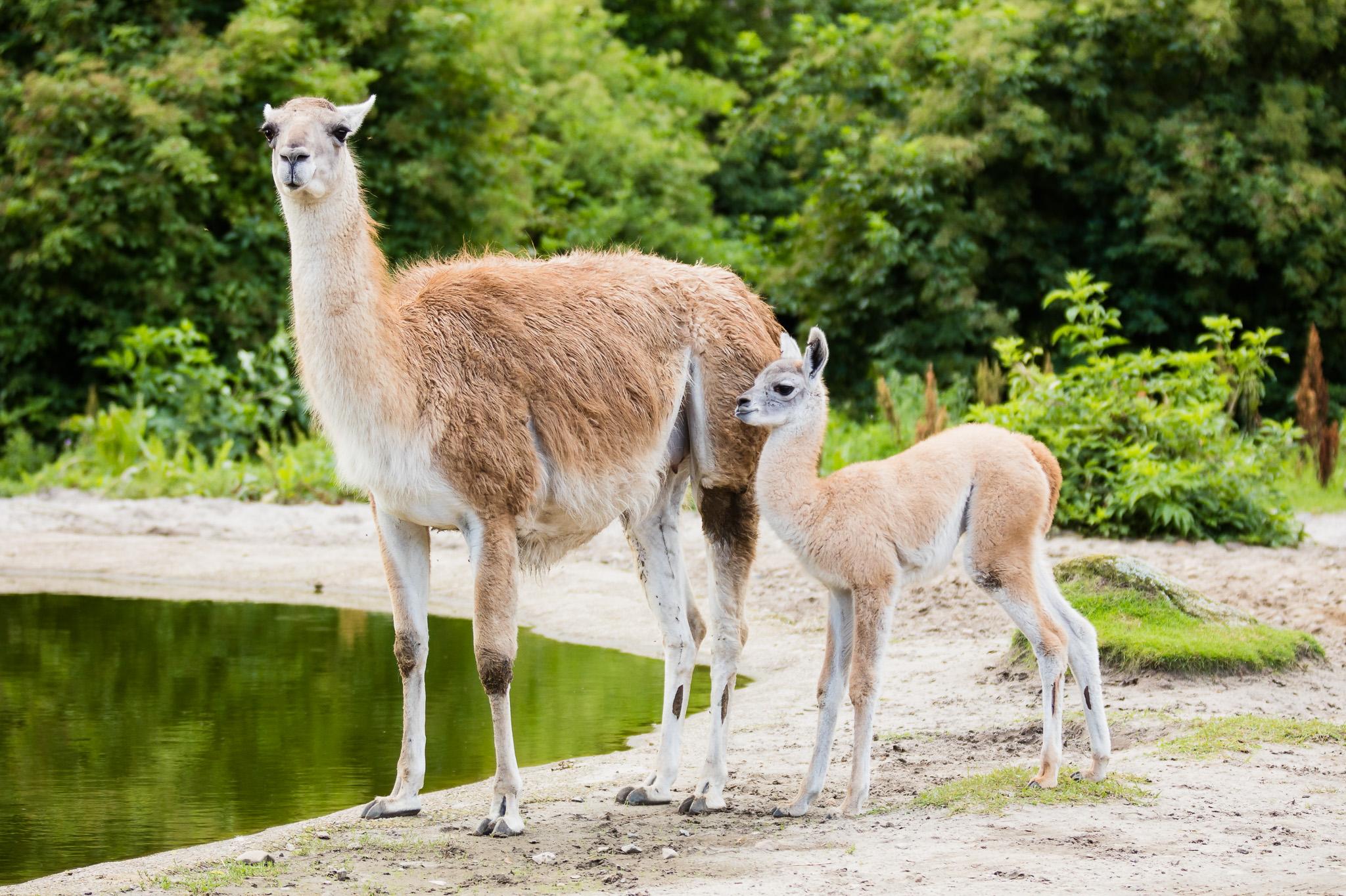 Givskud-Zoo-Safari-NorthernWorkshops-2.jpg