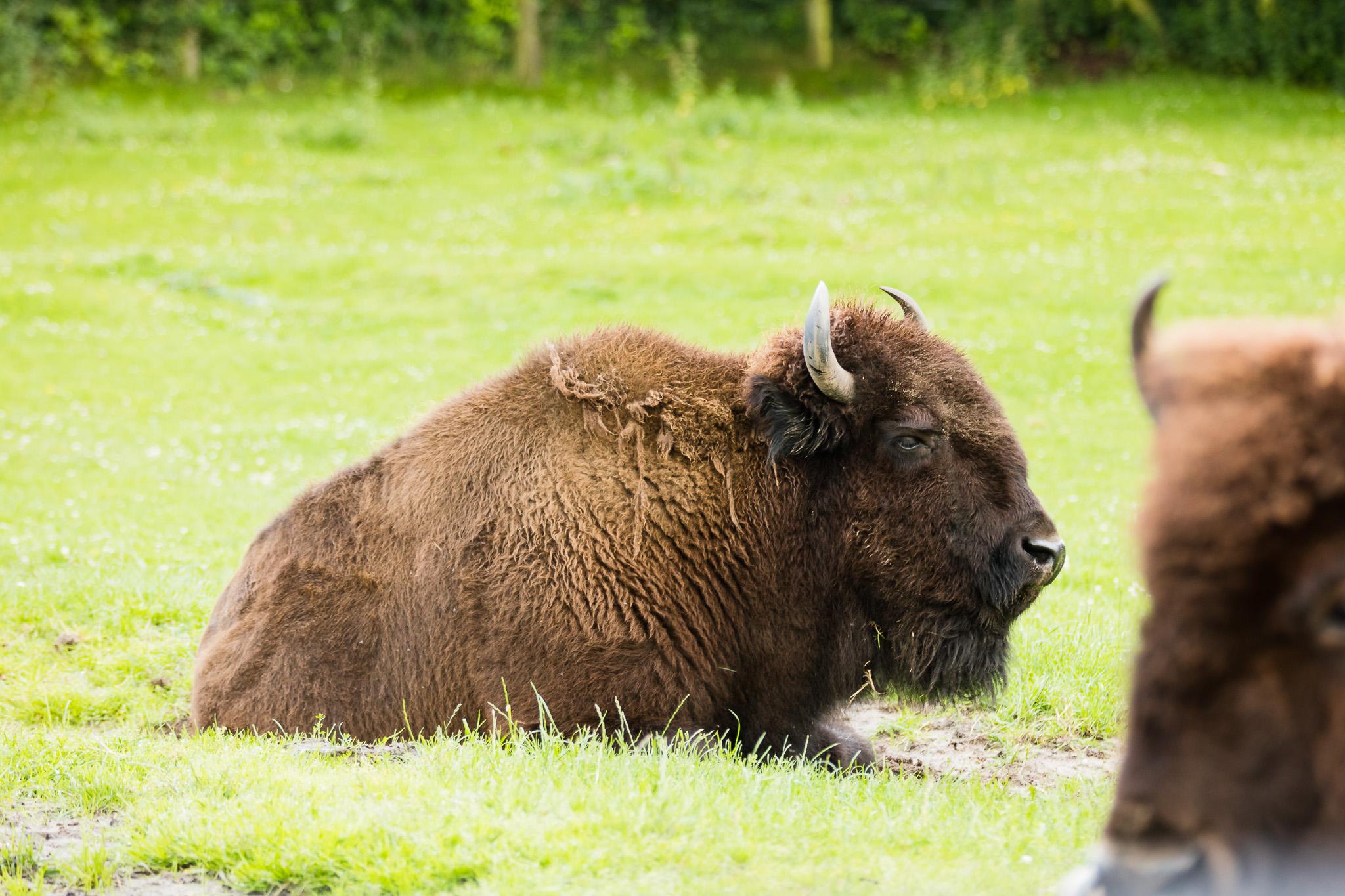 Givskud-Zoo-Safari-NorthernWorkshops-4.jpg