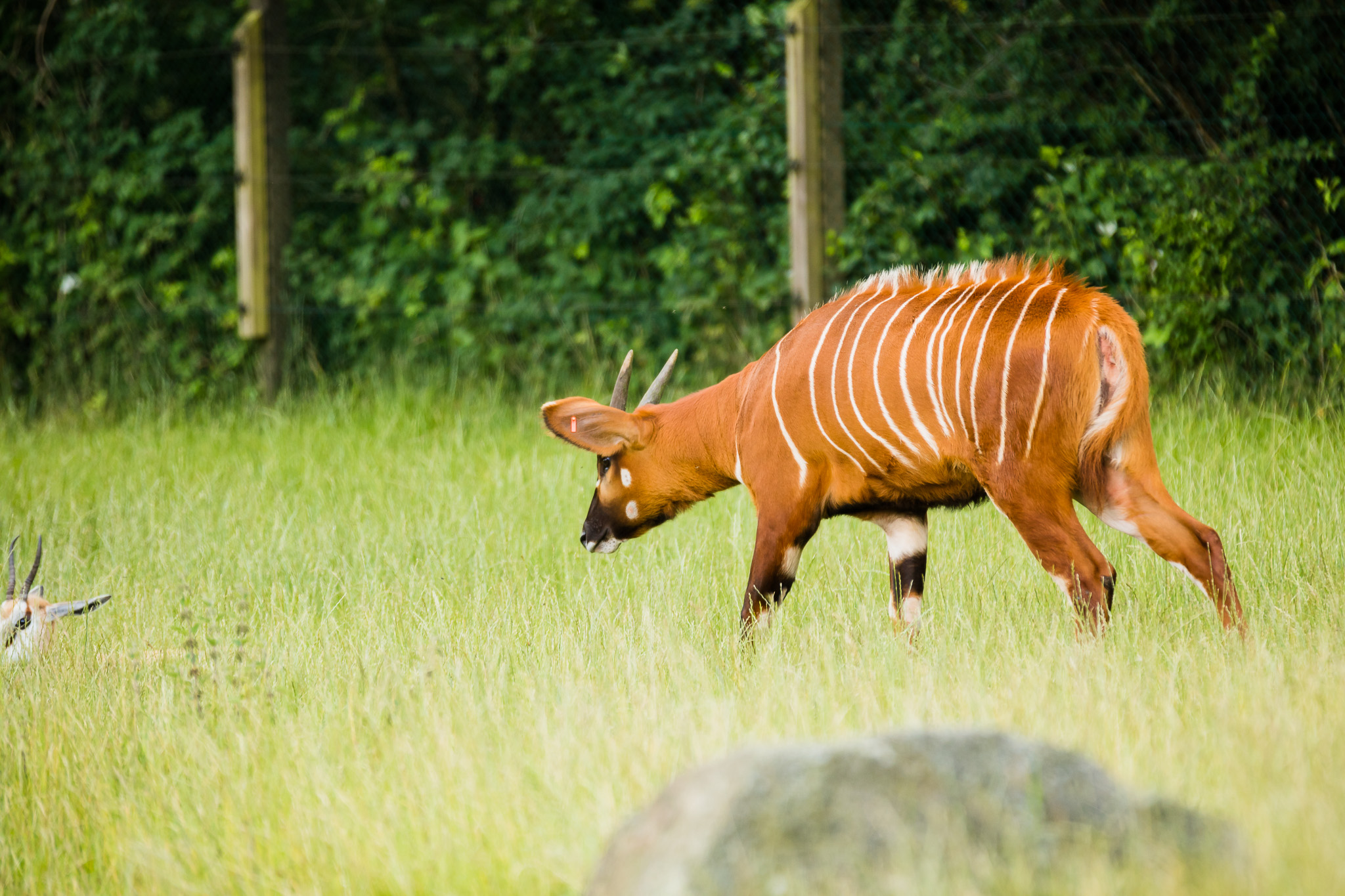 Givskud-Zoo-Safari-NorthernWorkshops-5.jpg