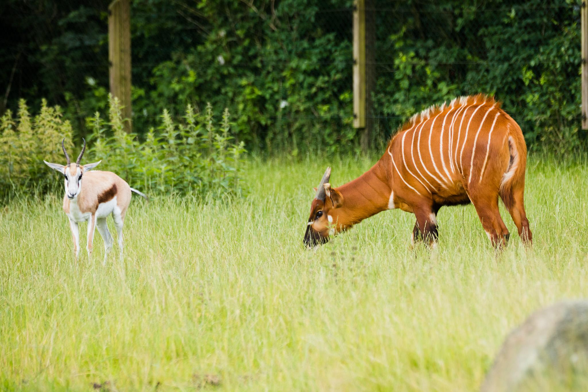 Givskud-Zoo-Safari-NorthernWorkshops-6.jpg