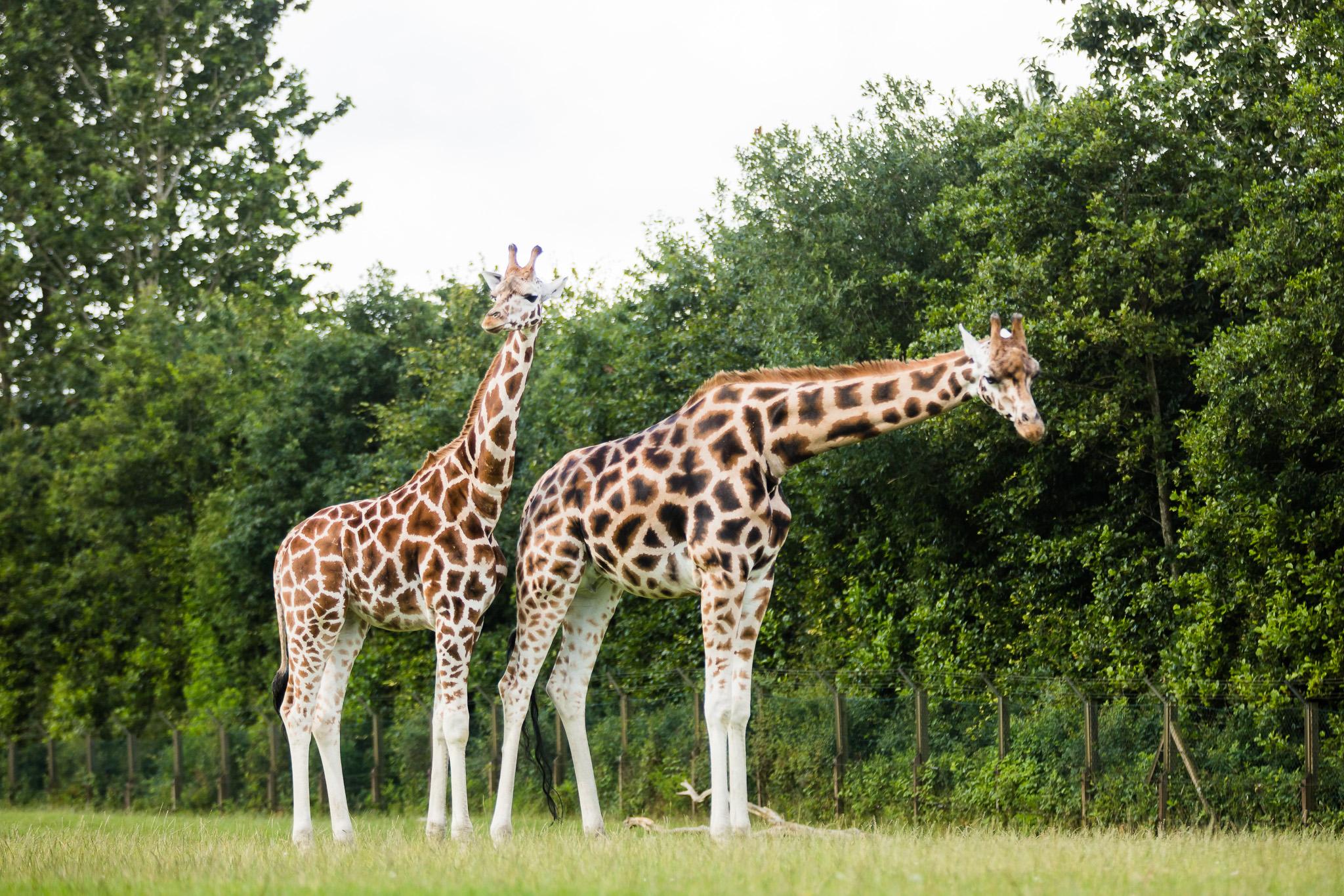 Givskud-Zoo-Safari-NorthernWorkshops-8.jpg