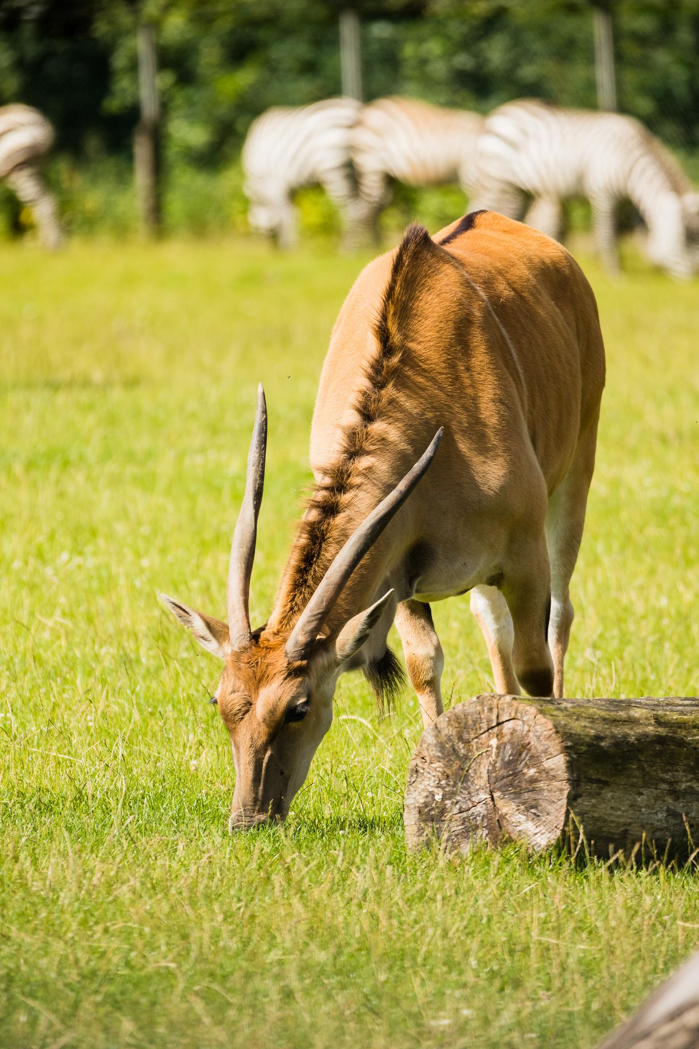 Givskud-Zoo-Safari-NorthernWorkshops-9.jpg