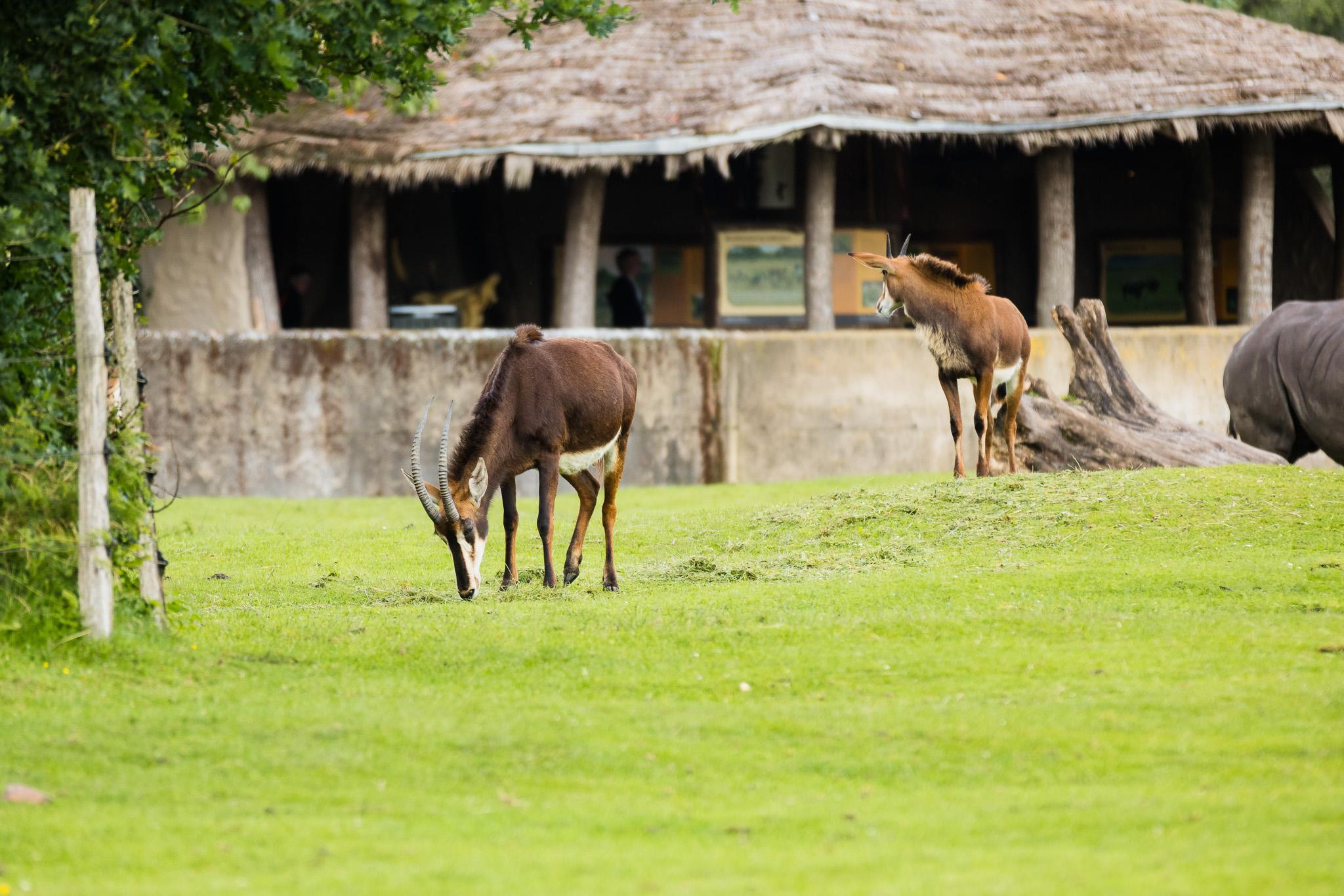 Givskud-Zoo-Safari-NorthernWorkshops-10.jpg