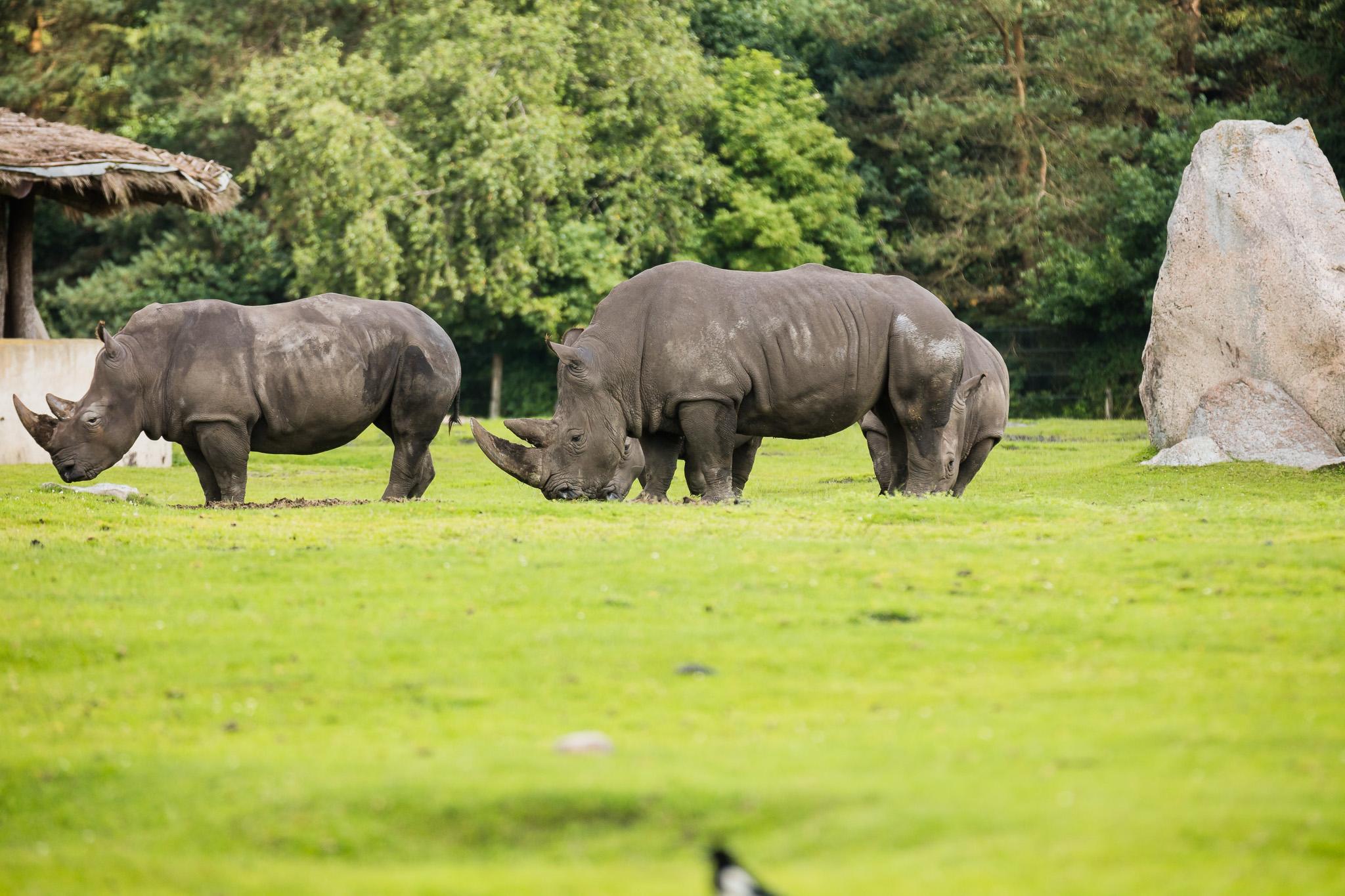 Givskud-Zoo-Safari-NorthernWorkshops-11.jpg