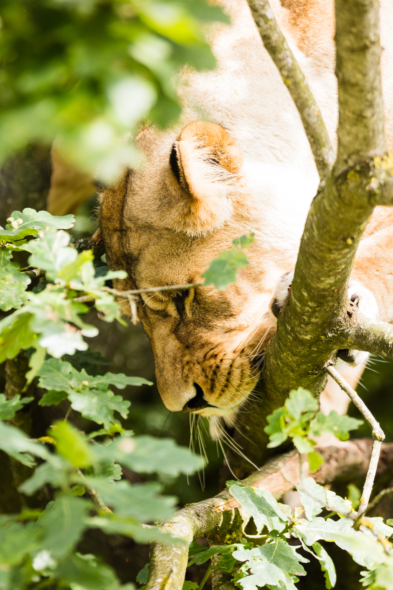 Givskud-Zoo-Safari-NorthernWorkshops-12.jpg