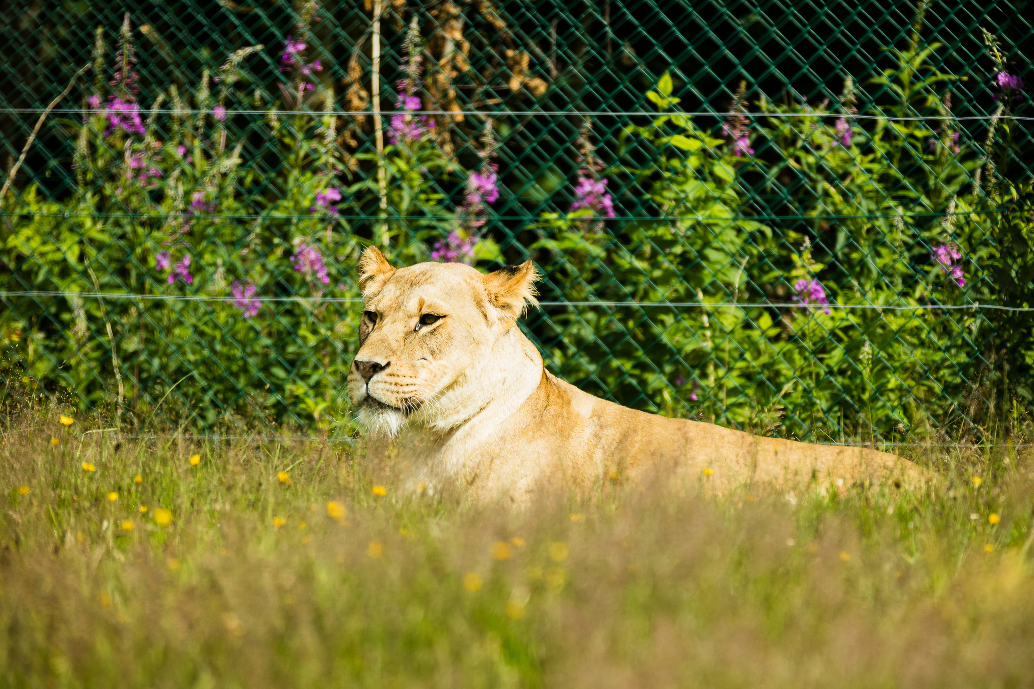 Givskud-Zoo-Safari-NorthernWorkshops-14.jpg