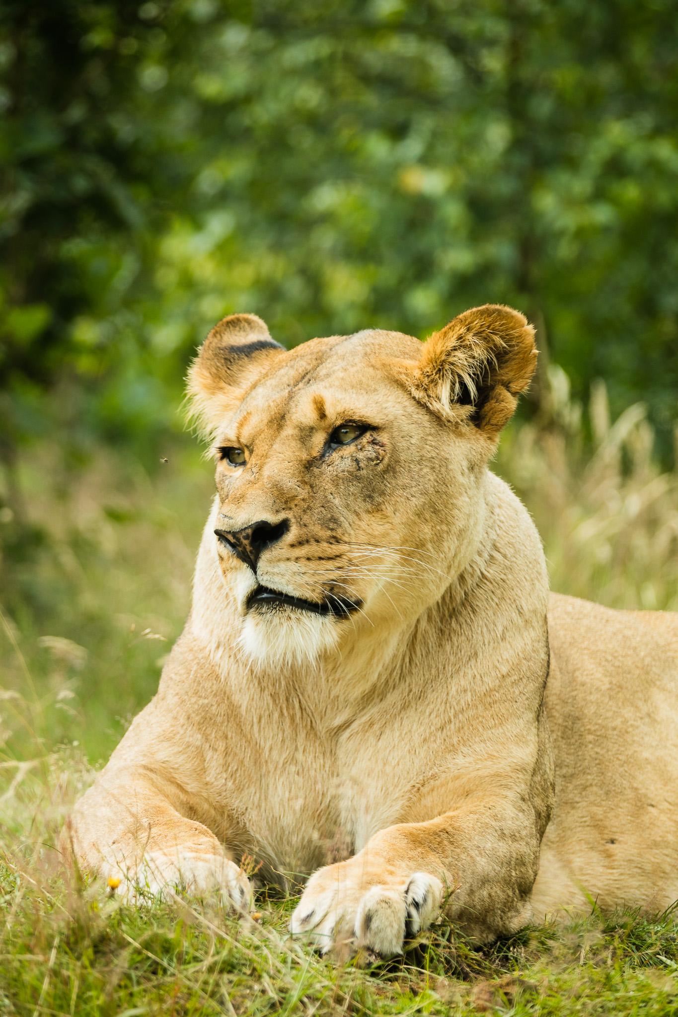 Givskud-Zoo-Safari-NorthernWorkshops-15.jpg