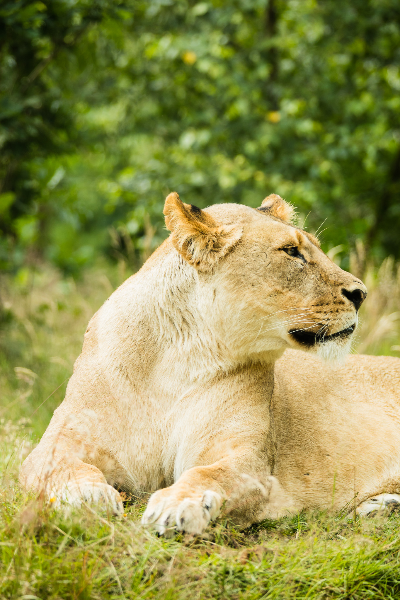 Givskud-Zoo-Safari-NorthernWorkshops-16.jpg