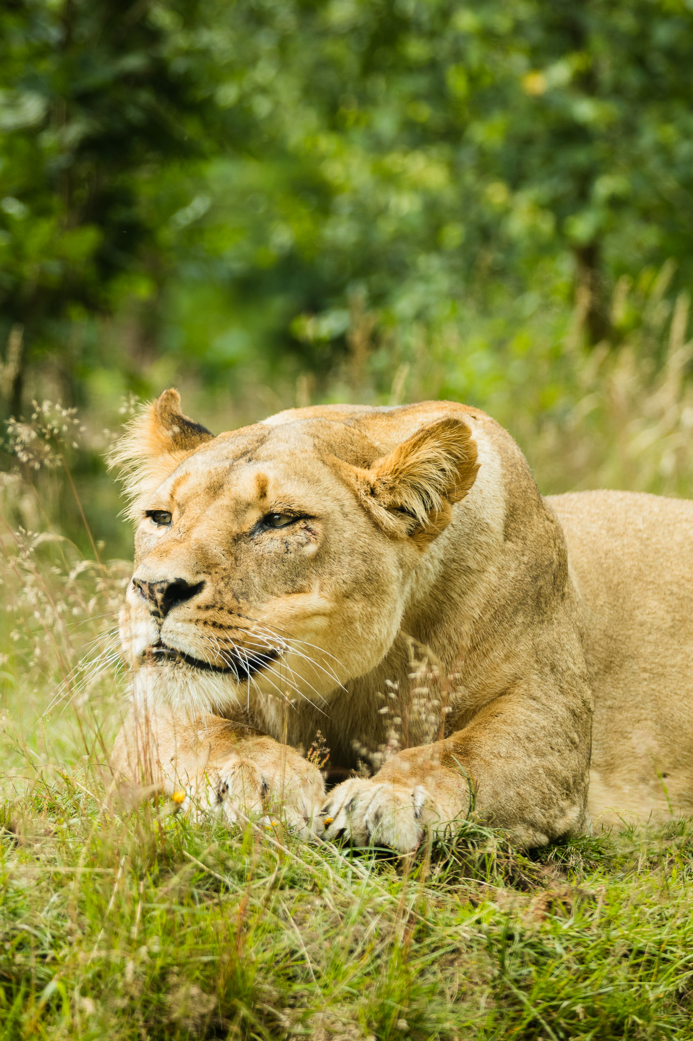 Givskud-Zoo-Safari-NorthernWorkshops-17.jpg