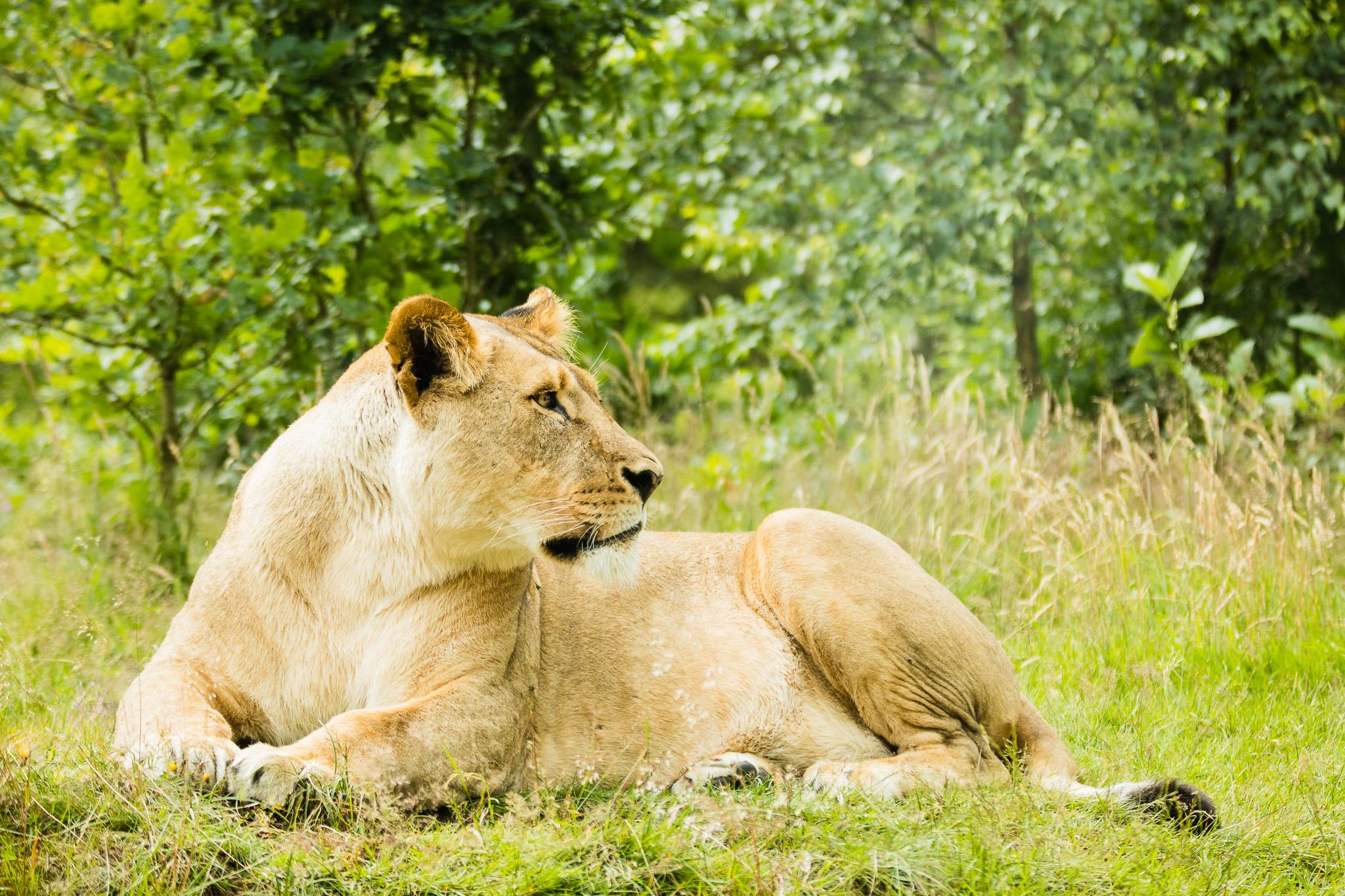 Givskud-Zoo-Safari-NorthernWorkshops-18.jpg