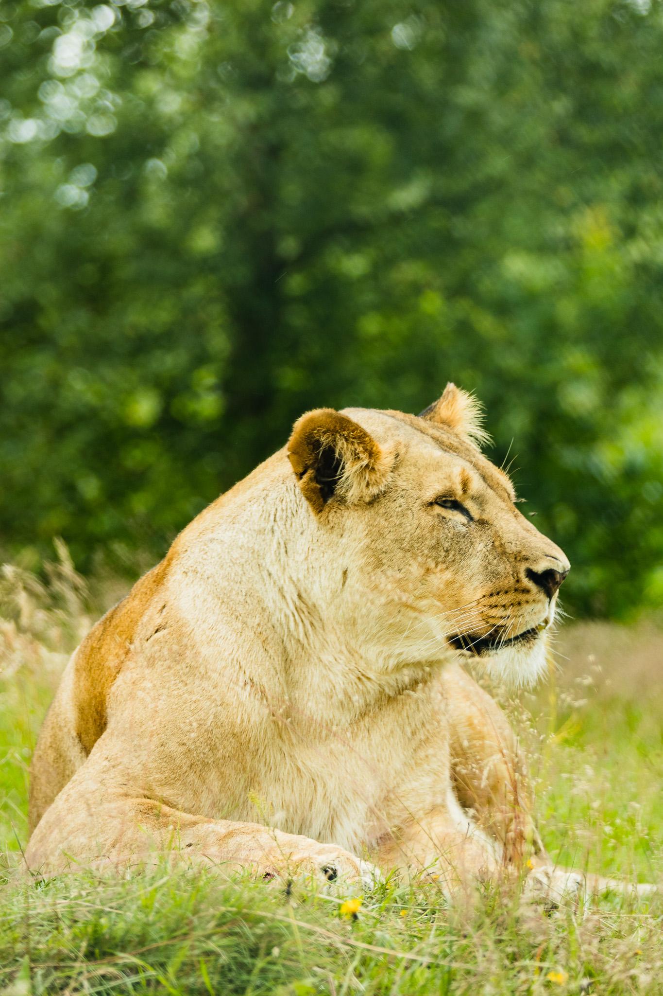 Givskud-Zoo-Safari-NorthernWorkshops-19.jpg