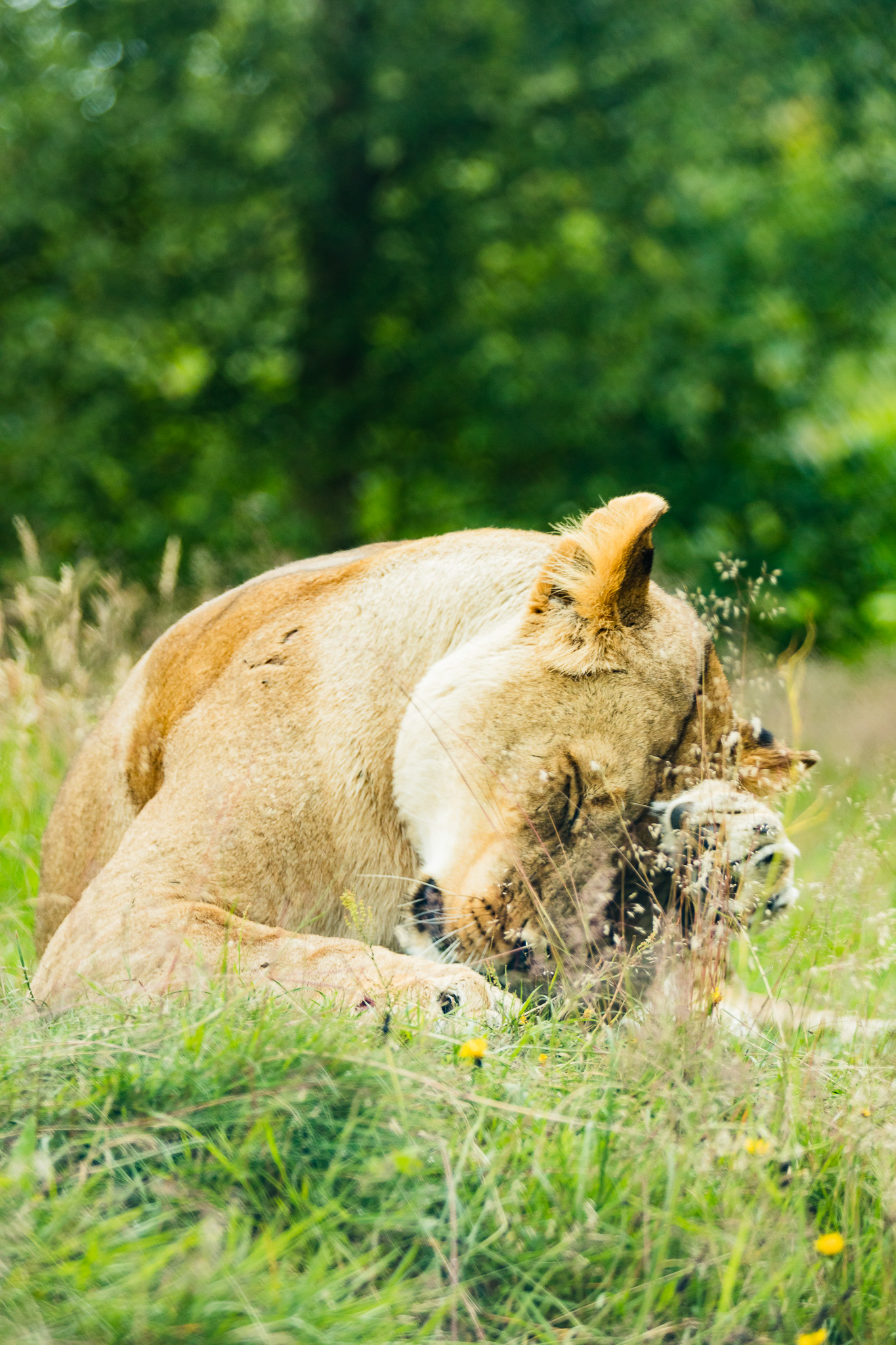 Givskud-Zoo-Safari-NorthernWorkshops-20.jpg
