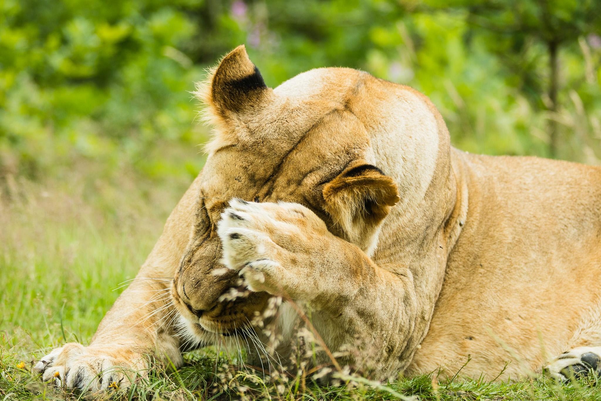 Givskud-Zoo-Safari-NorthernWorkshops-21.jpg
