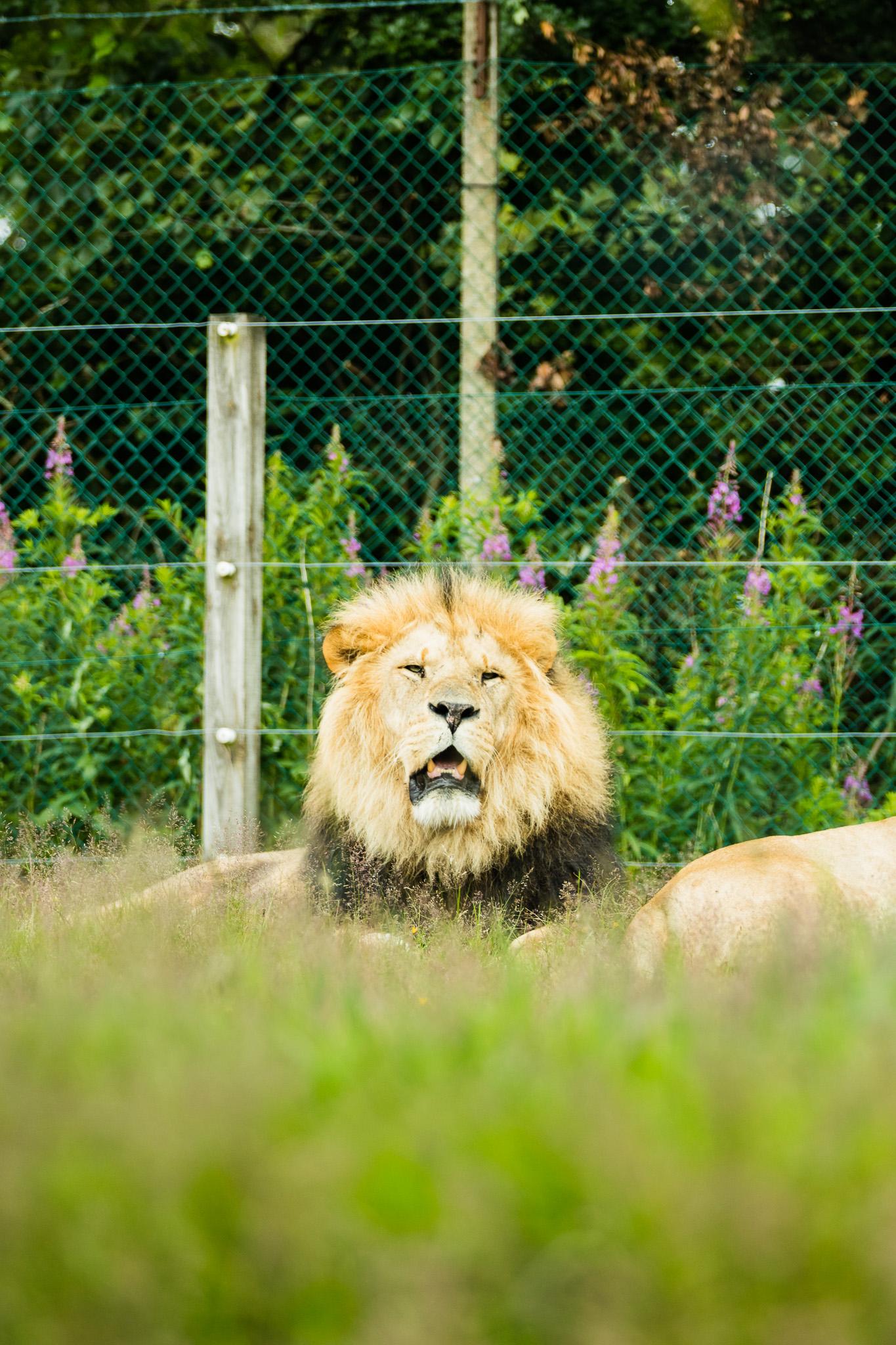 Givskud-Zoo-Safari-NorthernWorkshops-23.jpg