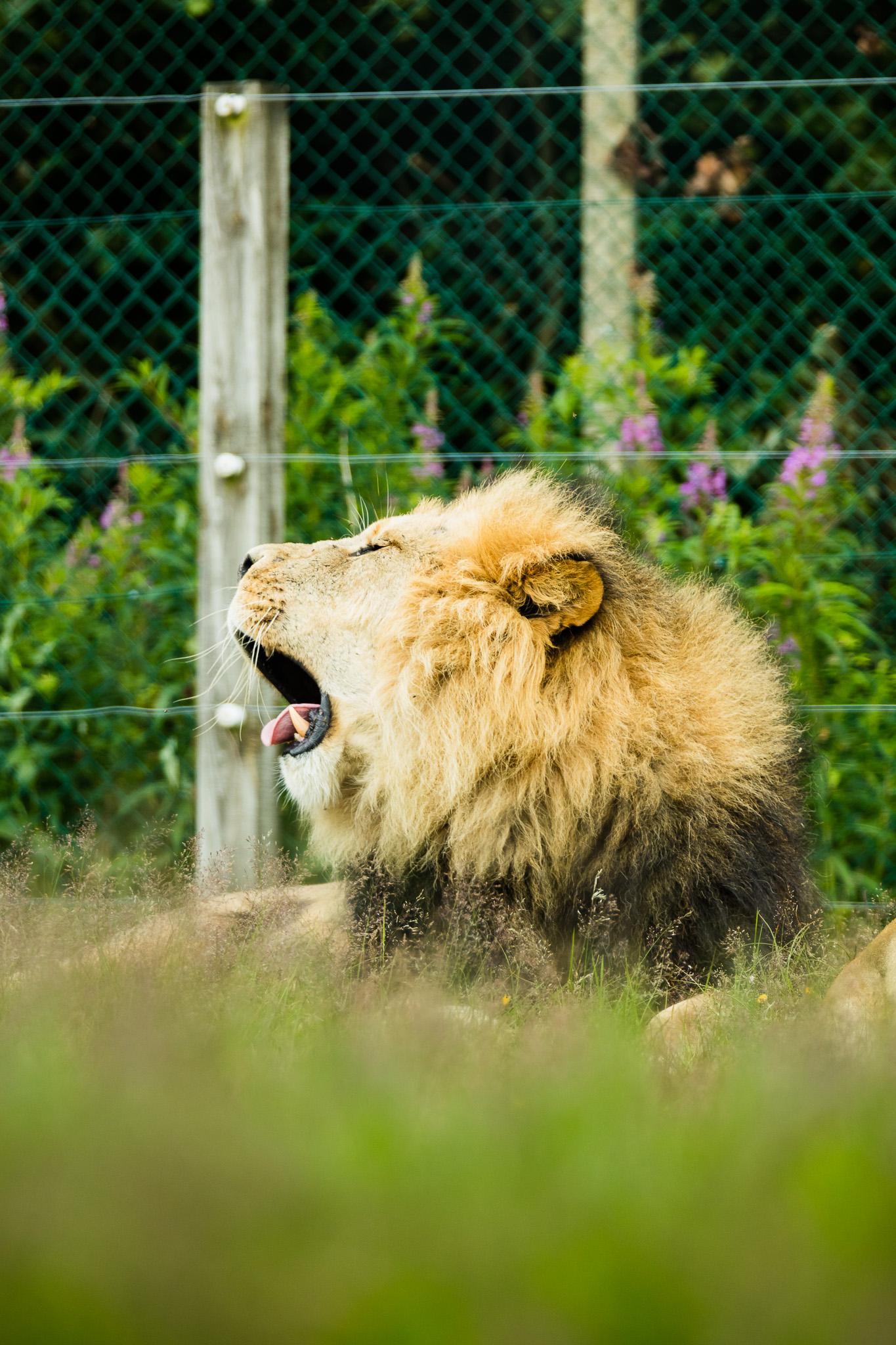 Givskud-Zoo-Safari-NorthernWorkshops-24.jpg