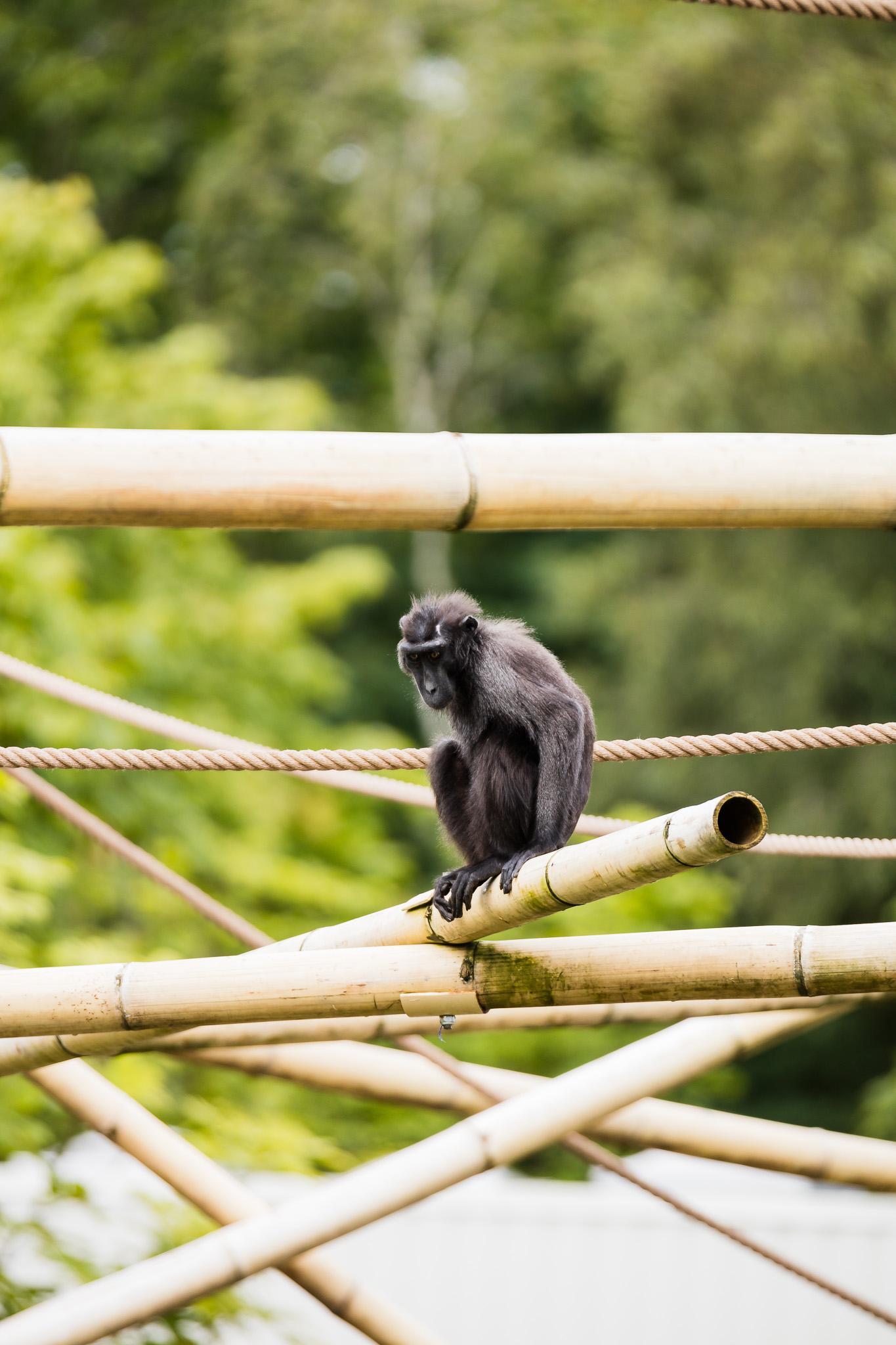 Givskud-Zoo-Safari-NorthernWorkshops-38.jpg