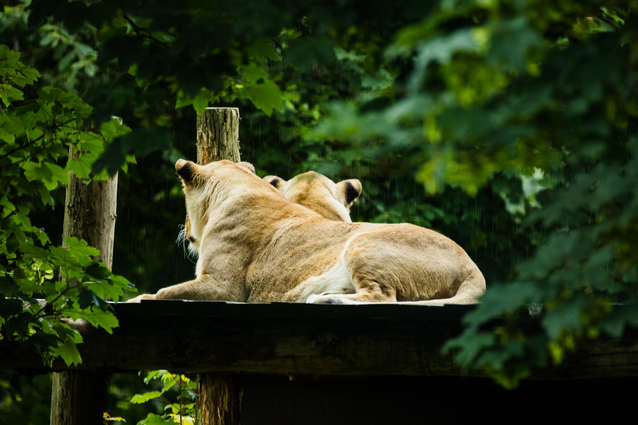 Givskud-Zoo-Safari-NorthernWorkshops-43.jpg