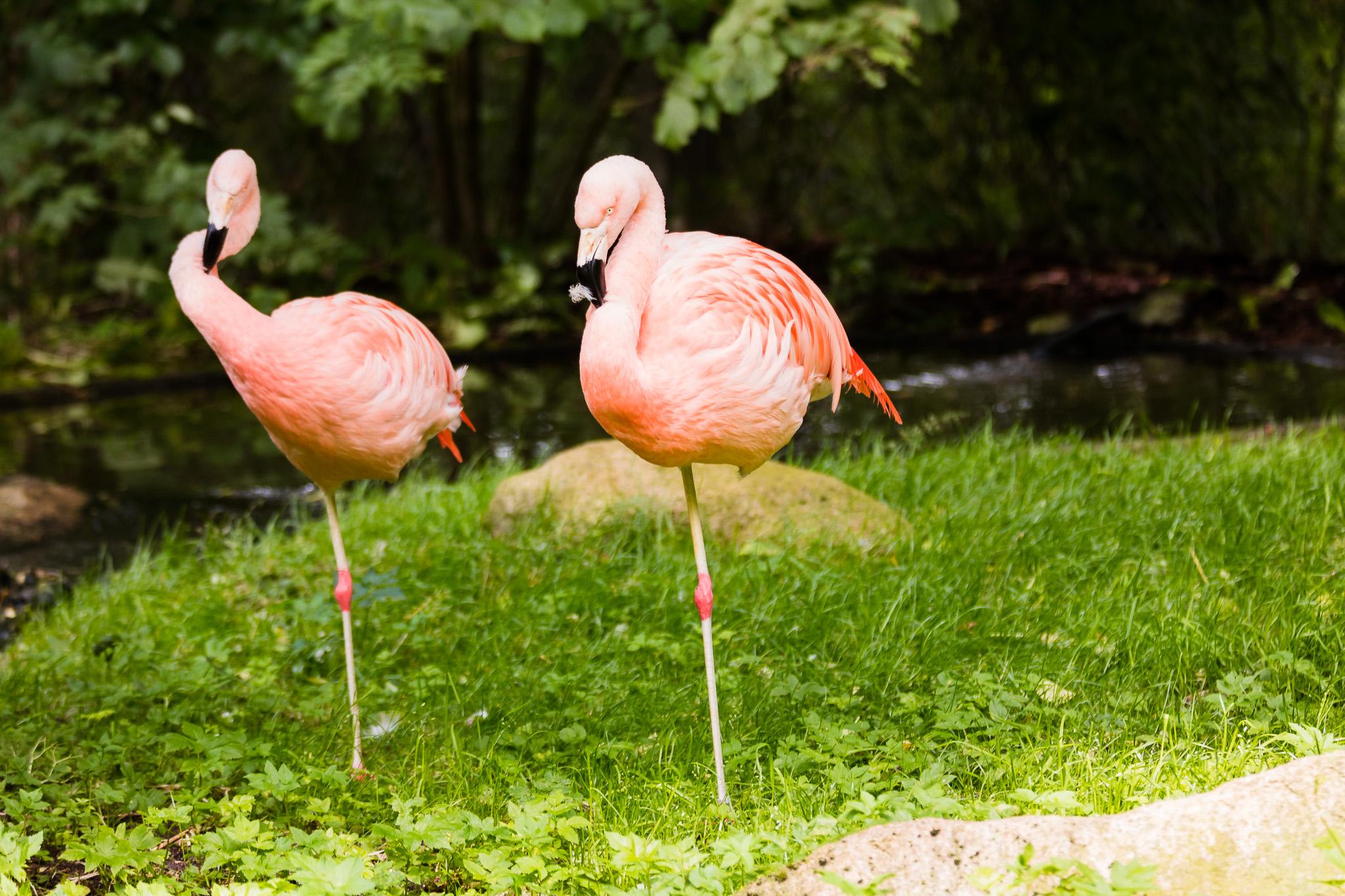Givskud-Zoo-Safari-NorthernWorkshops-46.jpg