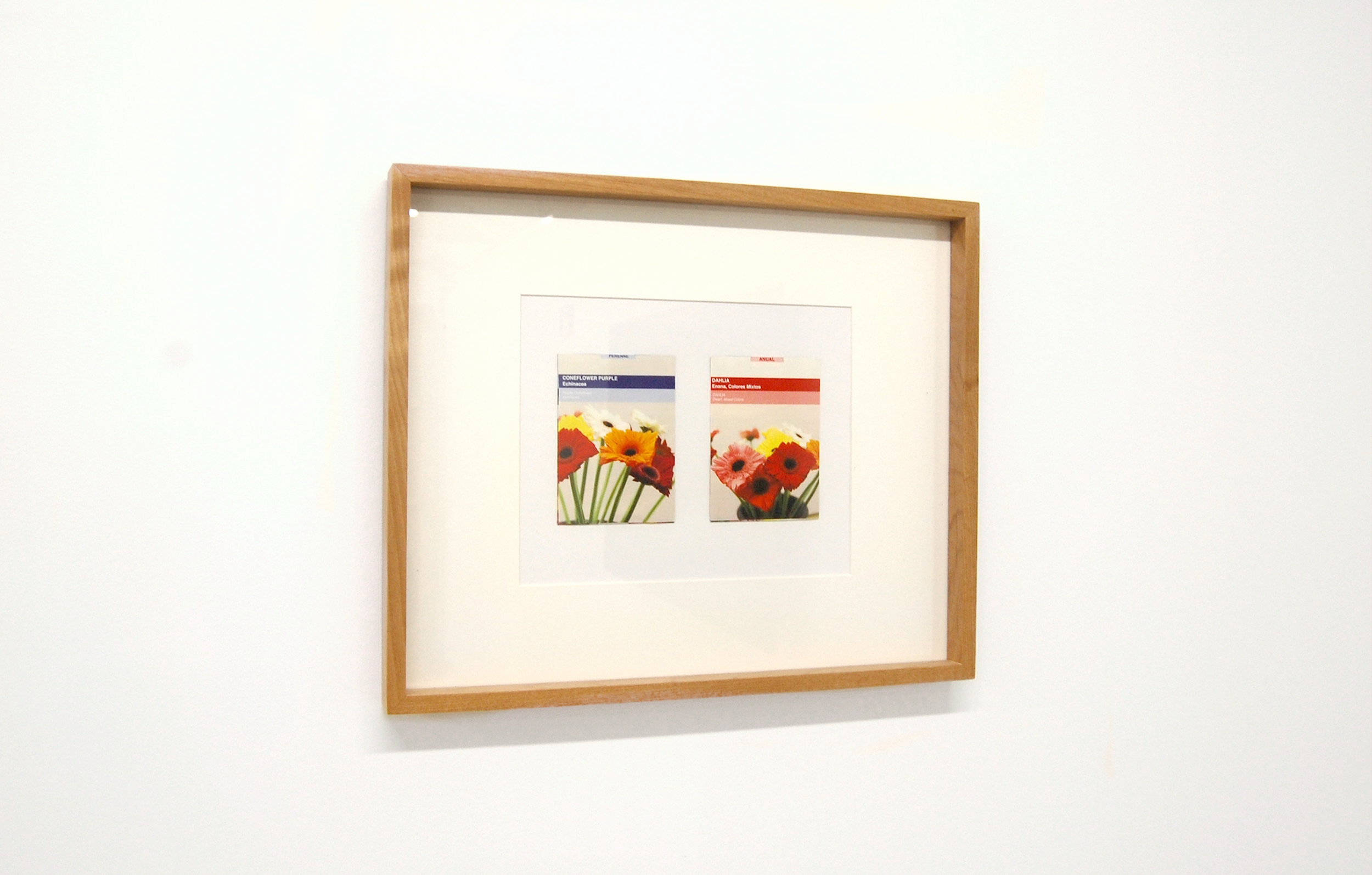 Forced Autumn , installation view at Chicago Manual Style, 2017. CARNE Marianna Murcia,  Seed Packets I & II , 2017.
