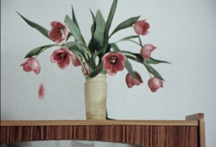 Wim van der Linden,  Tulips , 1966. Courtesy of the Collection Eye Filmmuseum, the Netherlands.