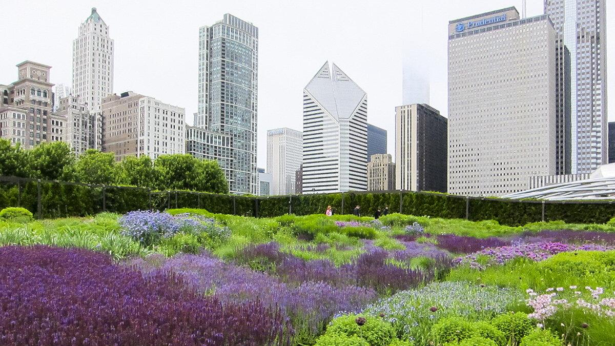 The Lurie Garden, Millennium Park, Chicago.