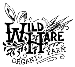 Wild Hare Organic Farm    Delicious Lebanese cucumbers featured in the Cucumber, Lime & Mint Shrub