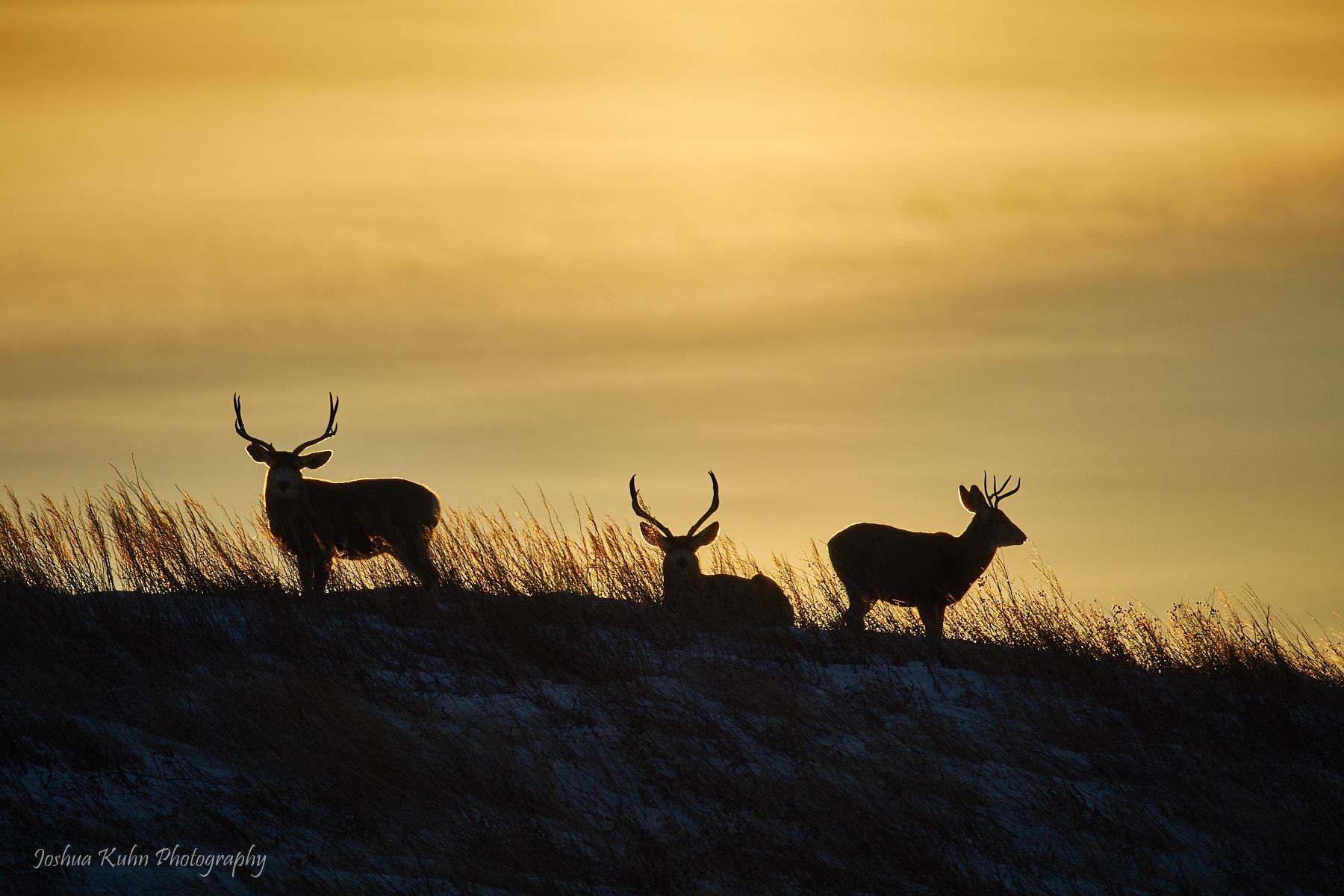 Sunset Trio  Purchase