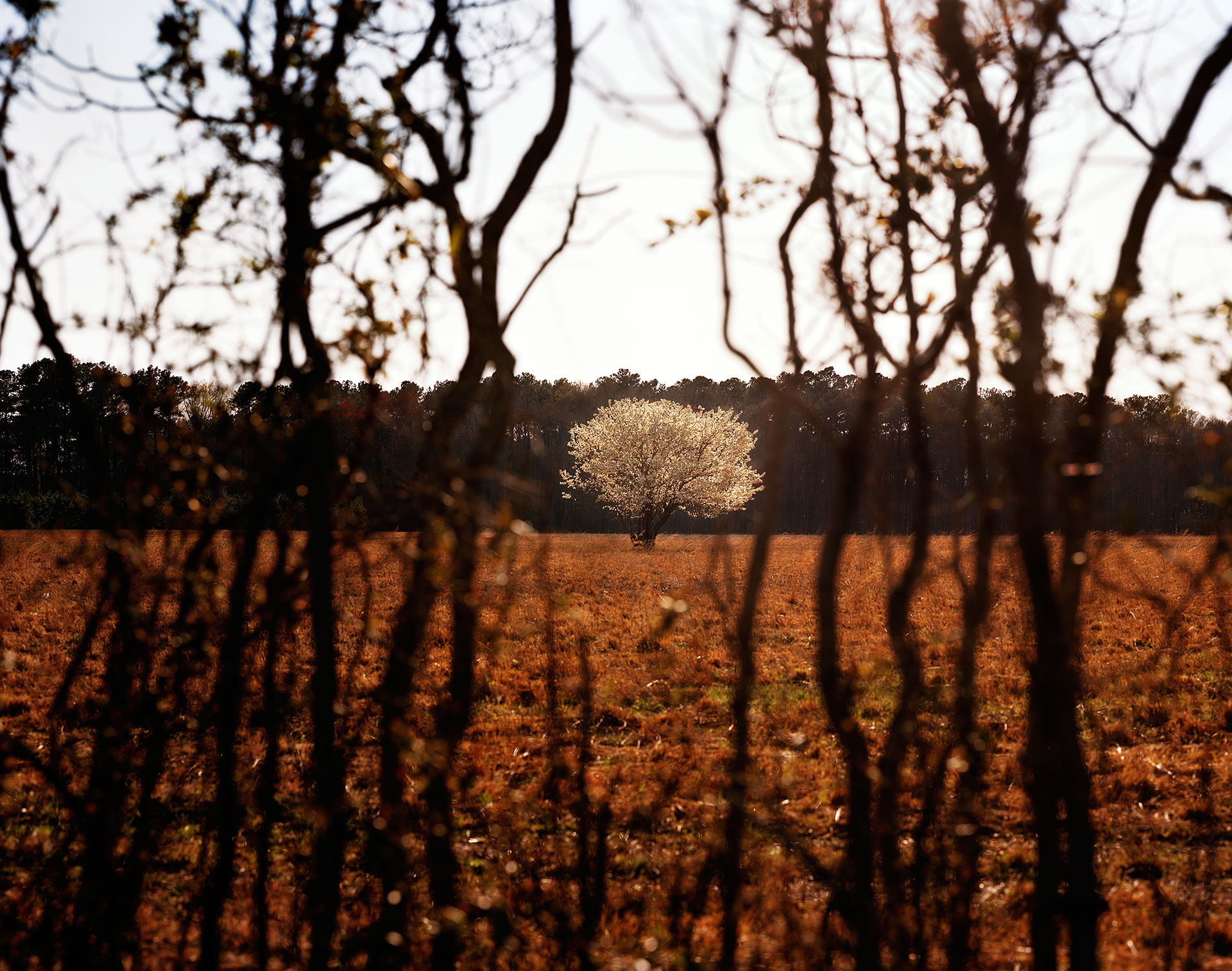 Sacred Space, Muckenfus Road