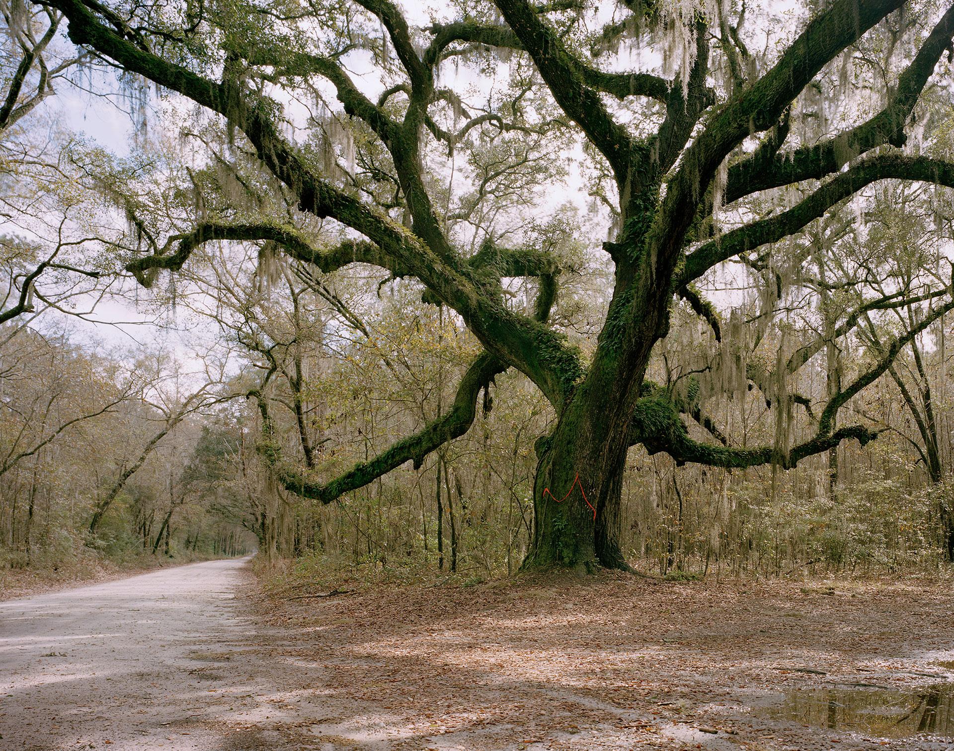 Hangin Tree, Jackass Road