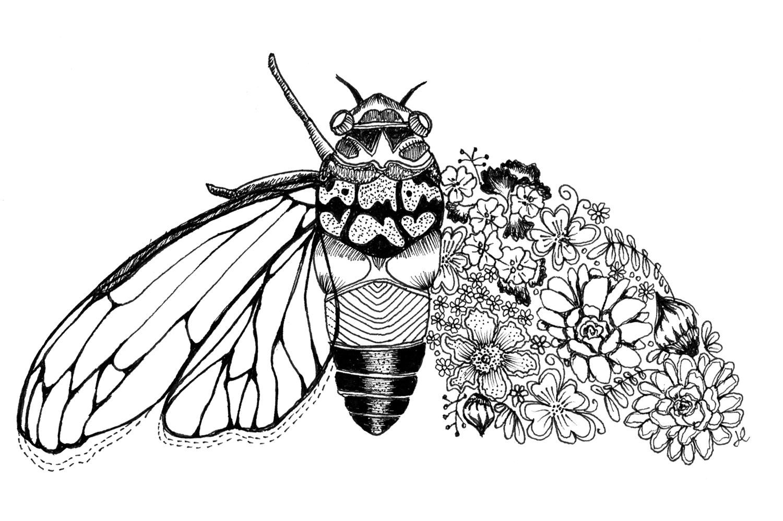 cicada_inktober.jpg