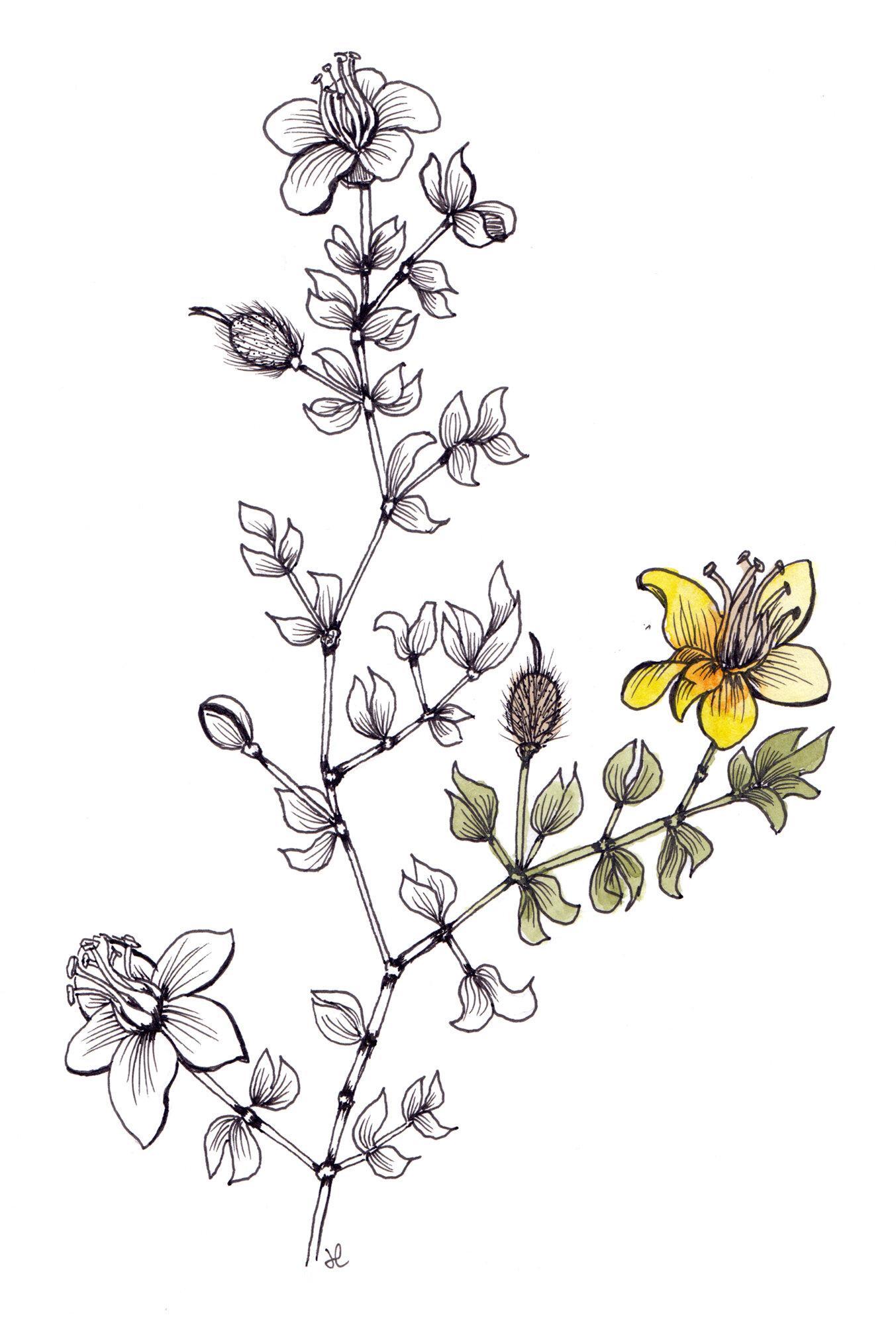 creosote-watercolor.jpg