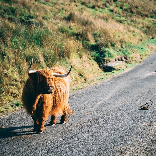 I think this might be as close as I want to get to this beast 🏃♂️ . . . . #wales #roadtrip #nature #summer