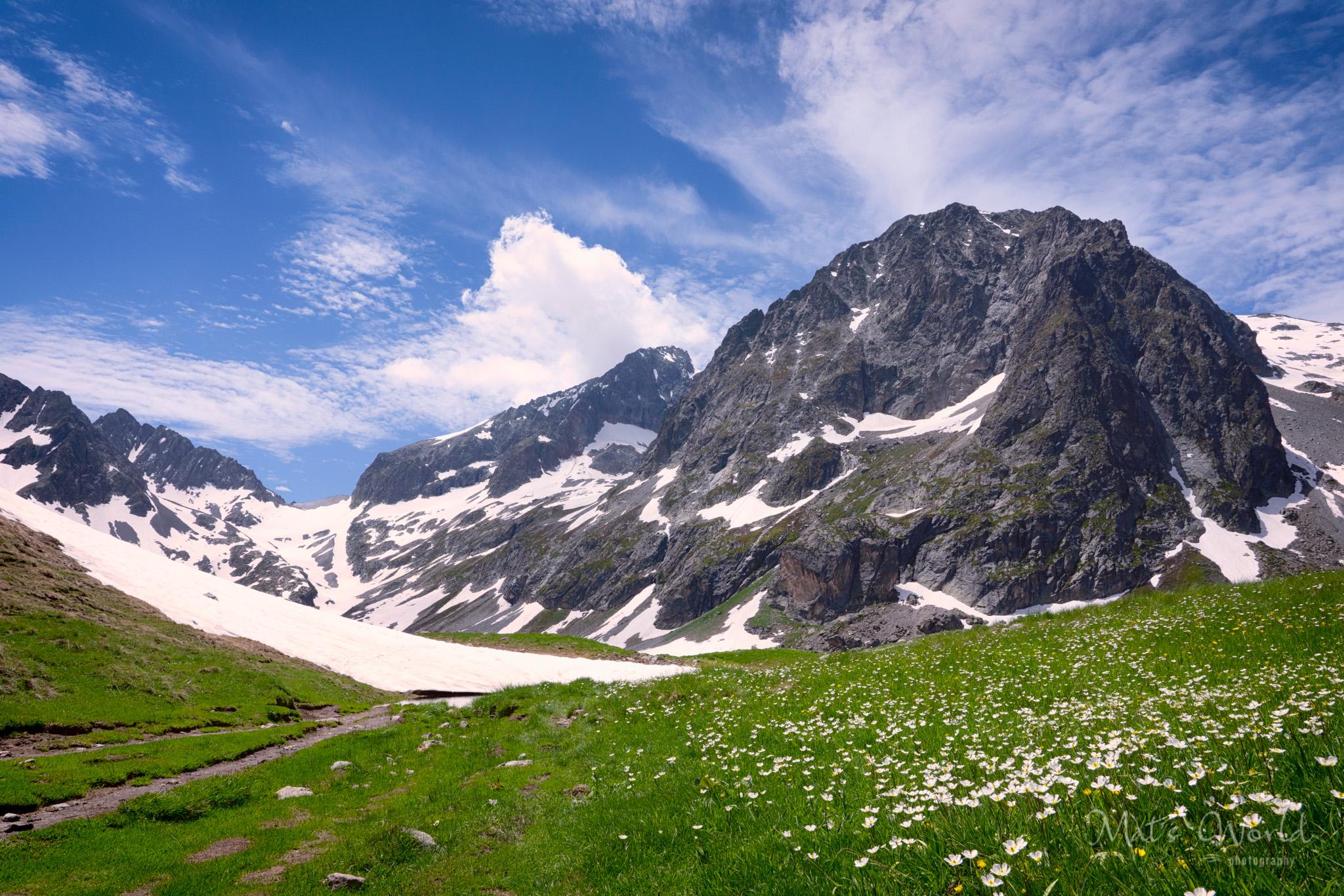 Alpine meadow in all its beauty.