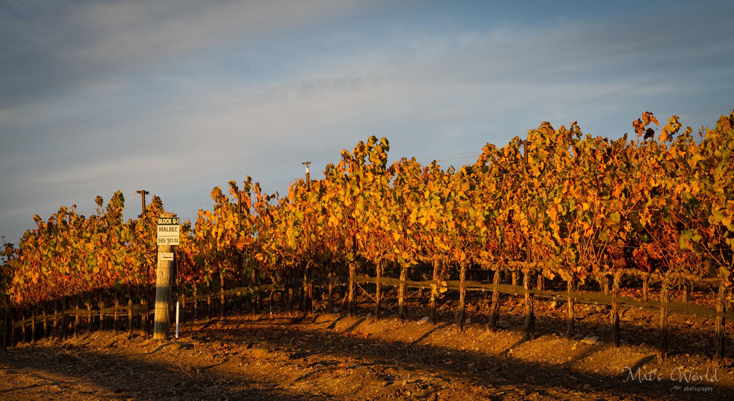 Vines (1 of 1).jpg