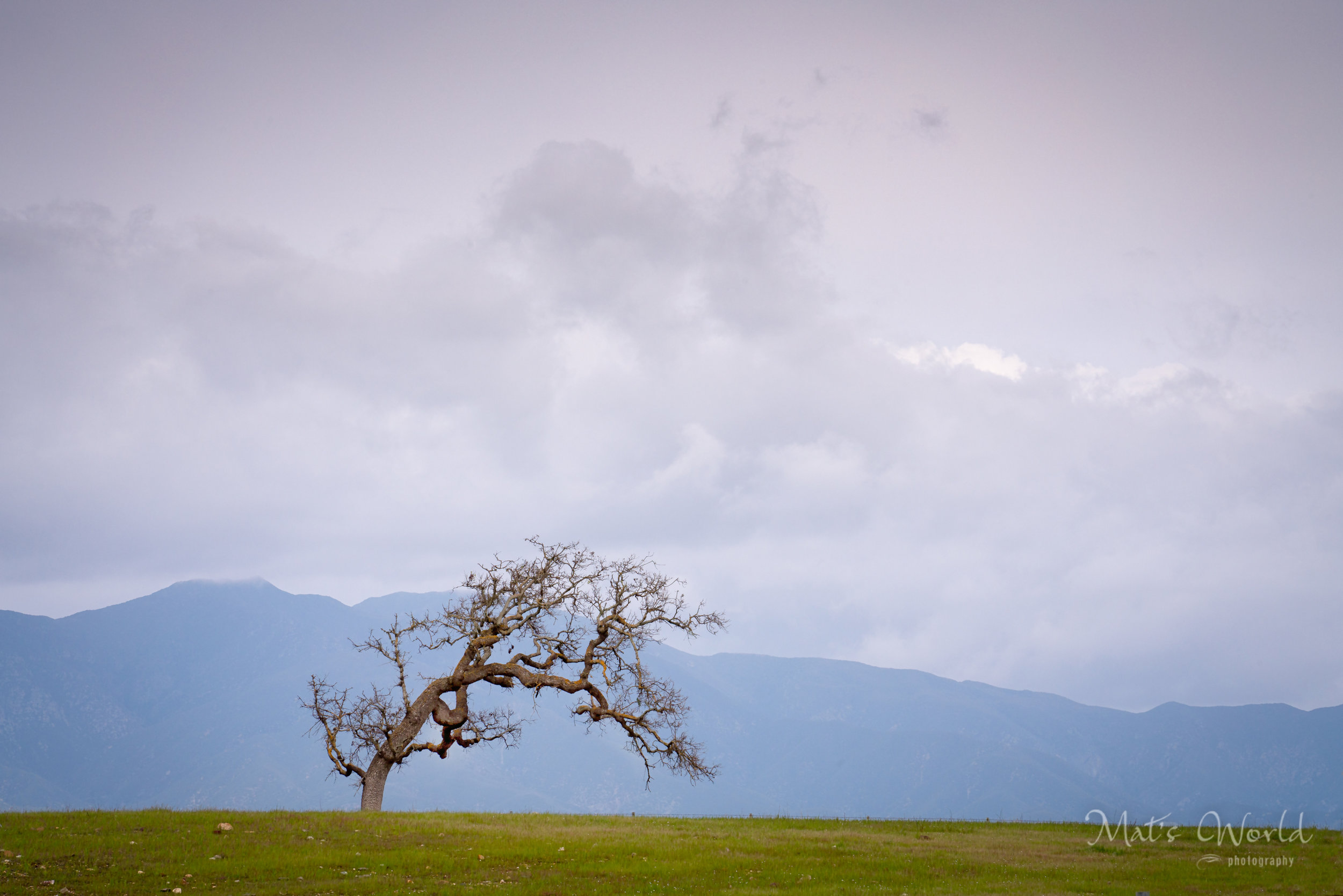 tree (1 of 1).jpg