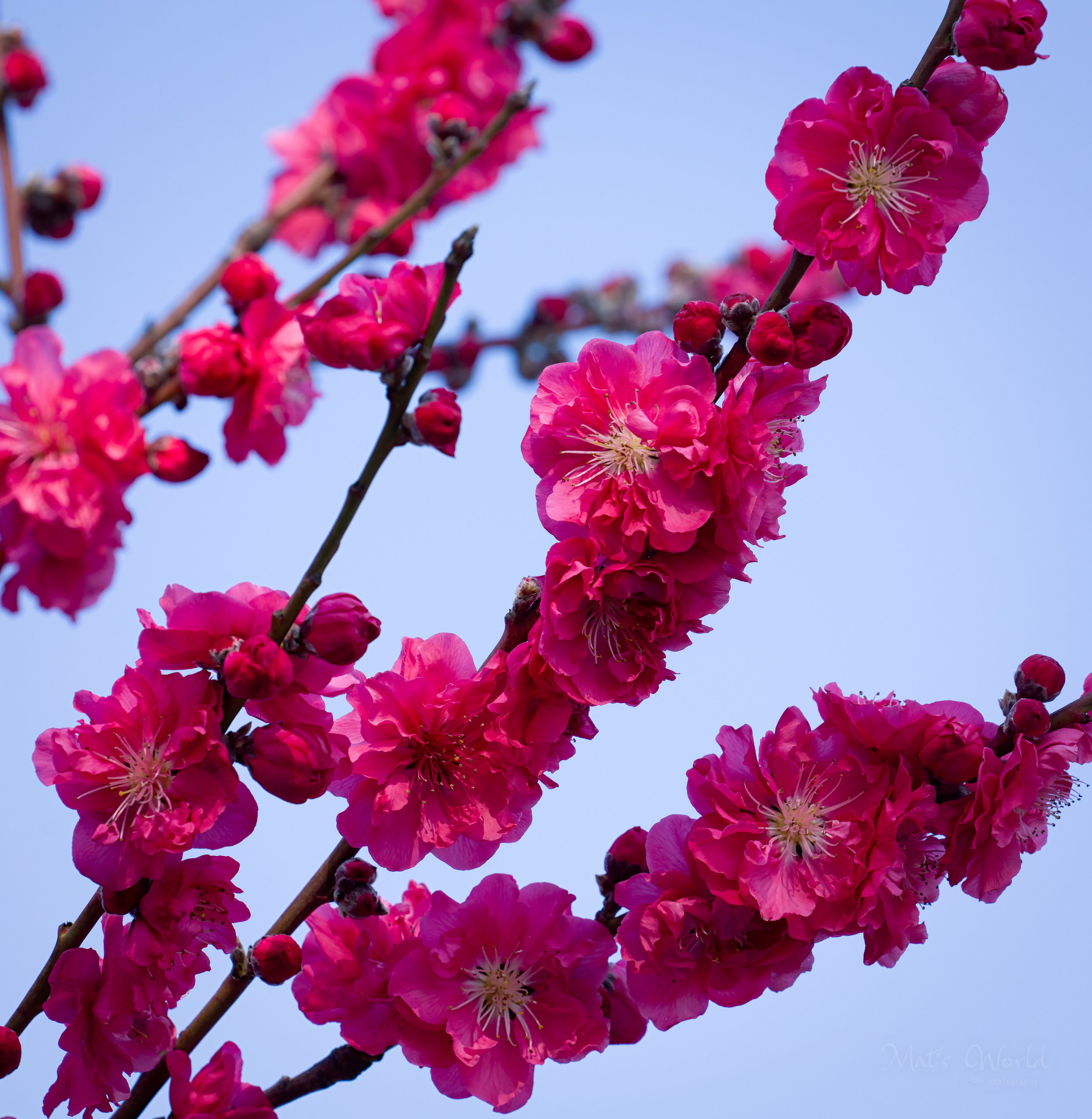 Spring (1 of 1).jpg