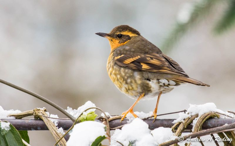 Native Plants & Birds - Create a haven for wildlife in your yard