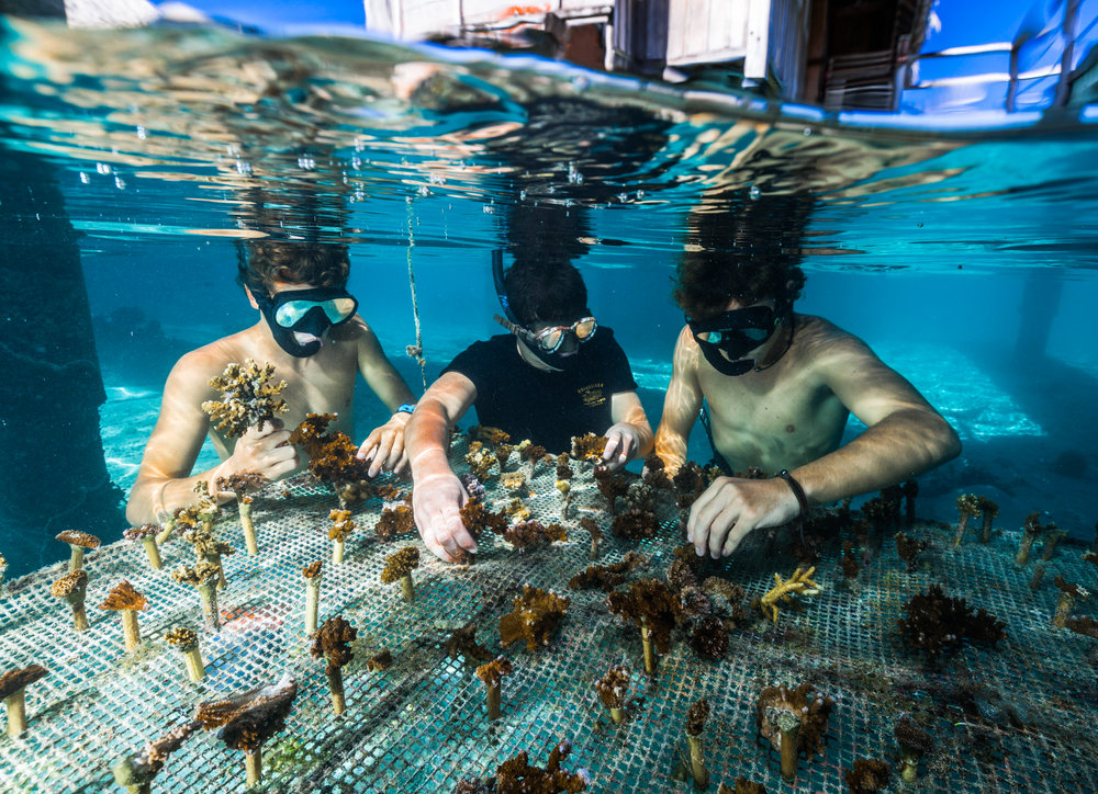 Image result for coral gardeners moorea