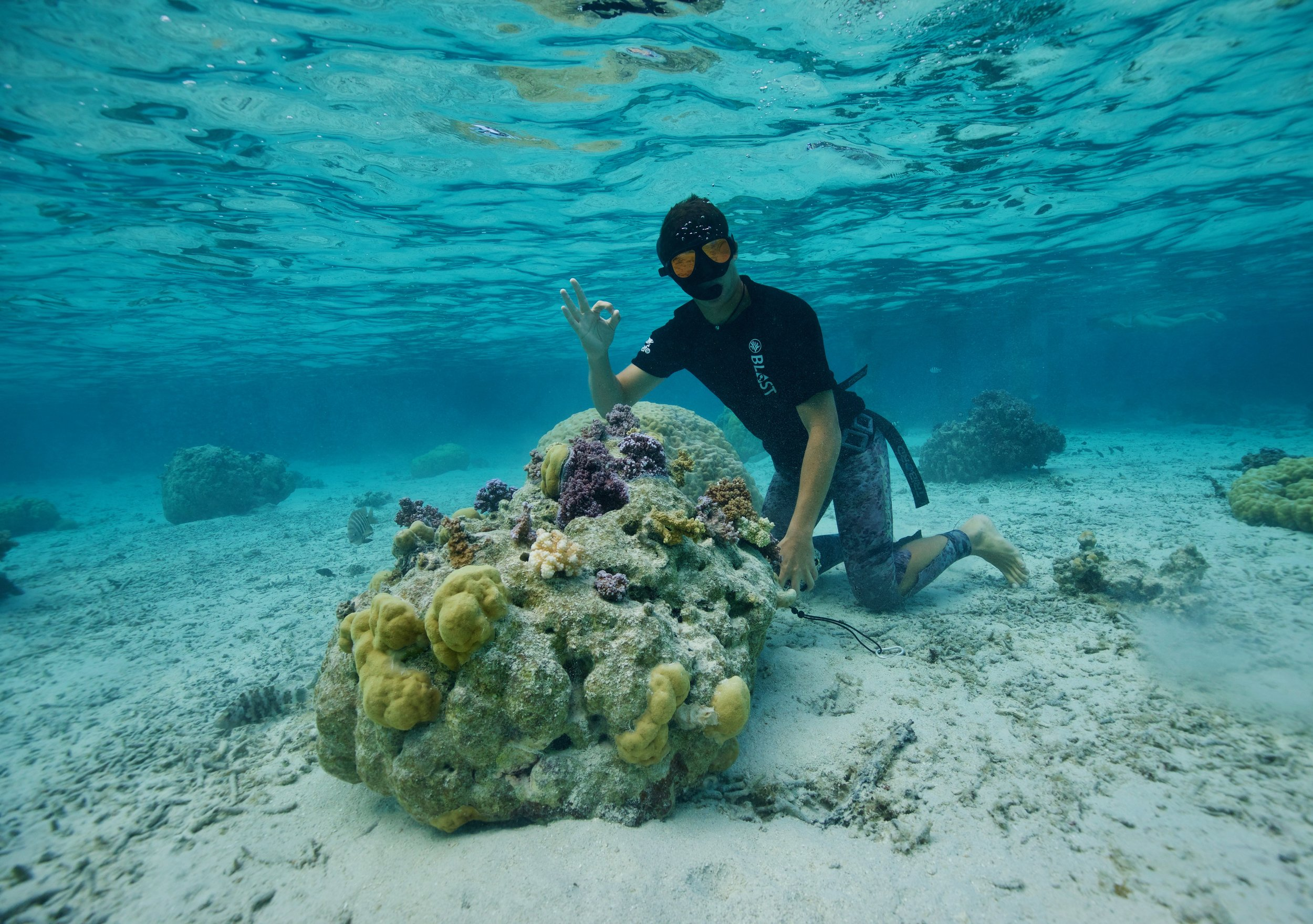 Photo: Moorea Coral Gardeners. Creating new reefs by transplanting coral cuttings into threatened areas.
