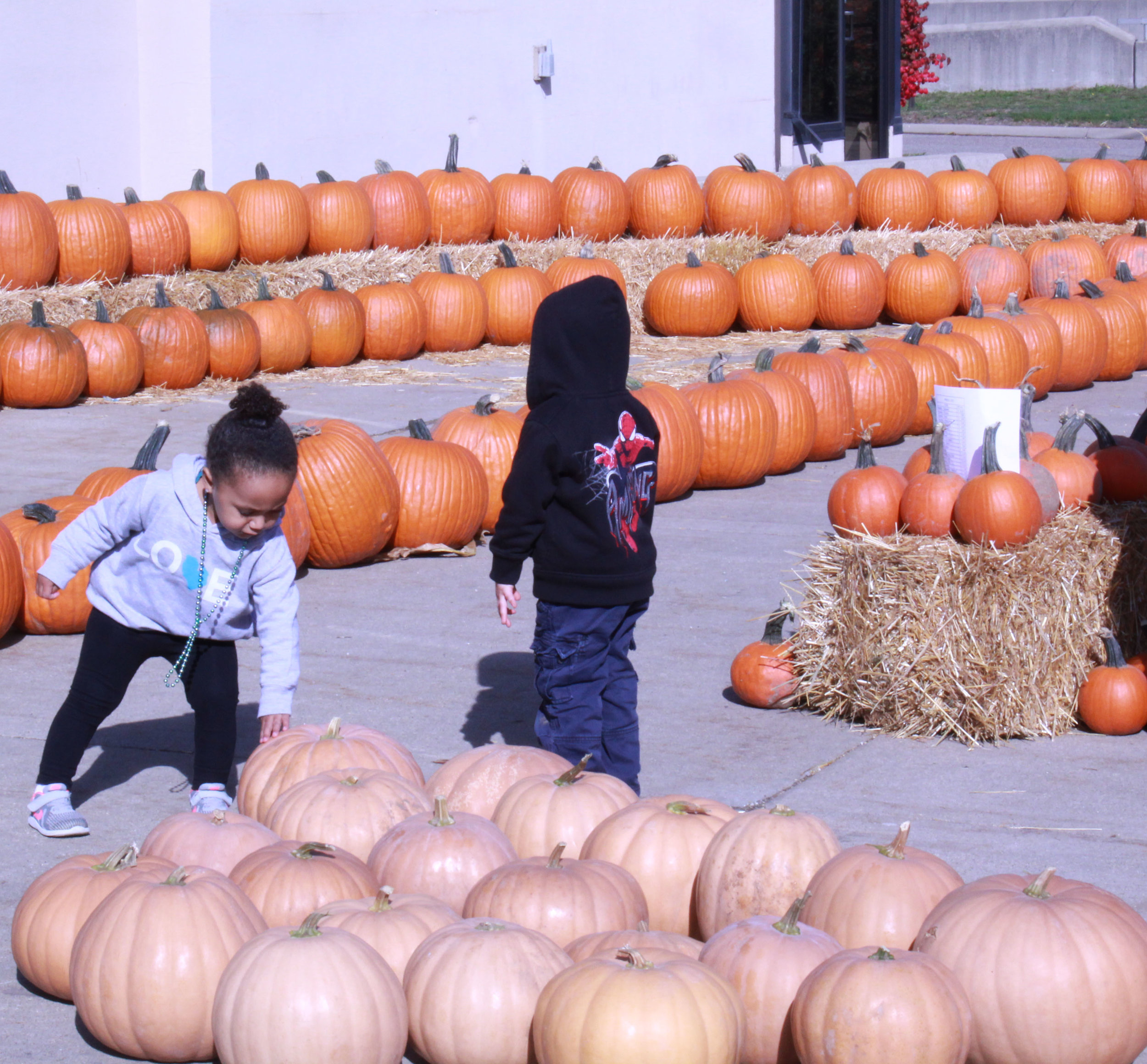 Ooh what does this do? The beautiful array of pumpkins caught the attention of everyone at the Harvest days, including the little ones.