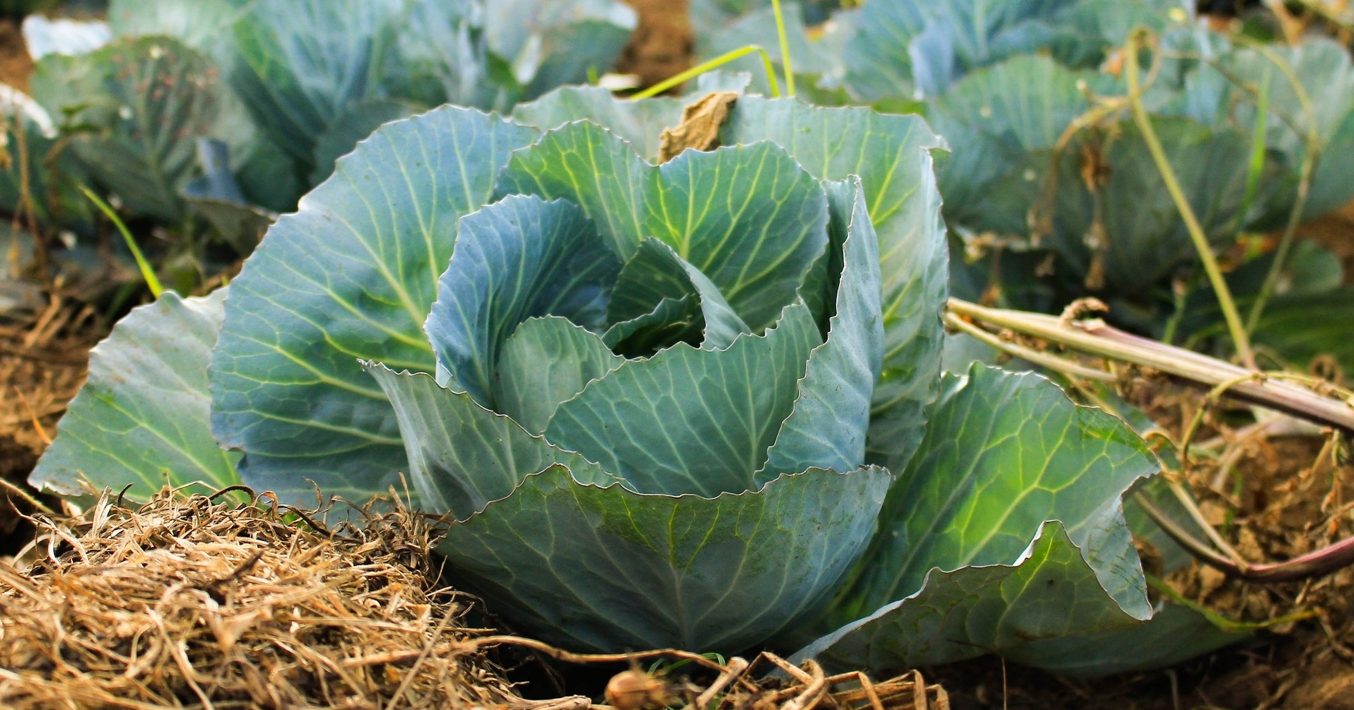 about farmr -