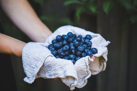 man holds blueberries-545052.jpeg