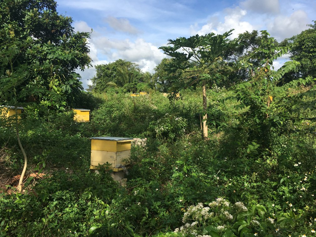 Little Island Honey Dominican Republic Pure Raw OrganicIMG_9220.jpg