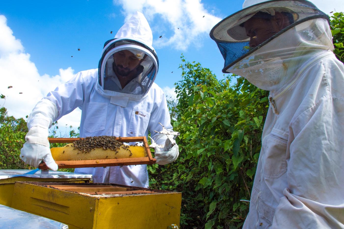 resized_Little Island Honey Formatografia Dominican Republic Raw Honey-16.jpg