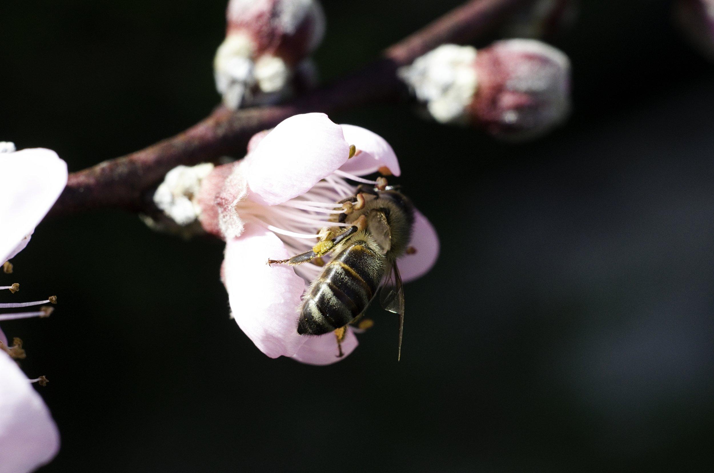 La importancia de las abejas -