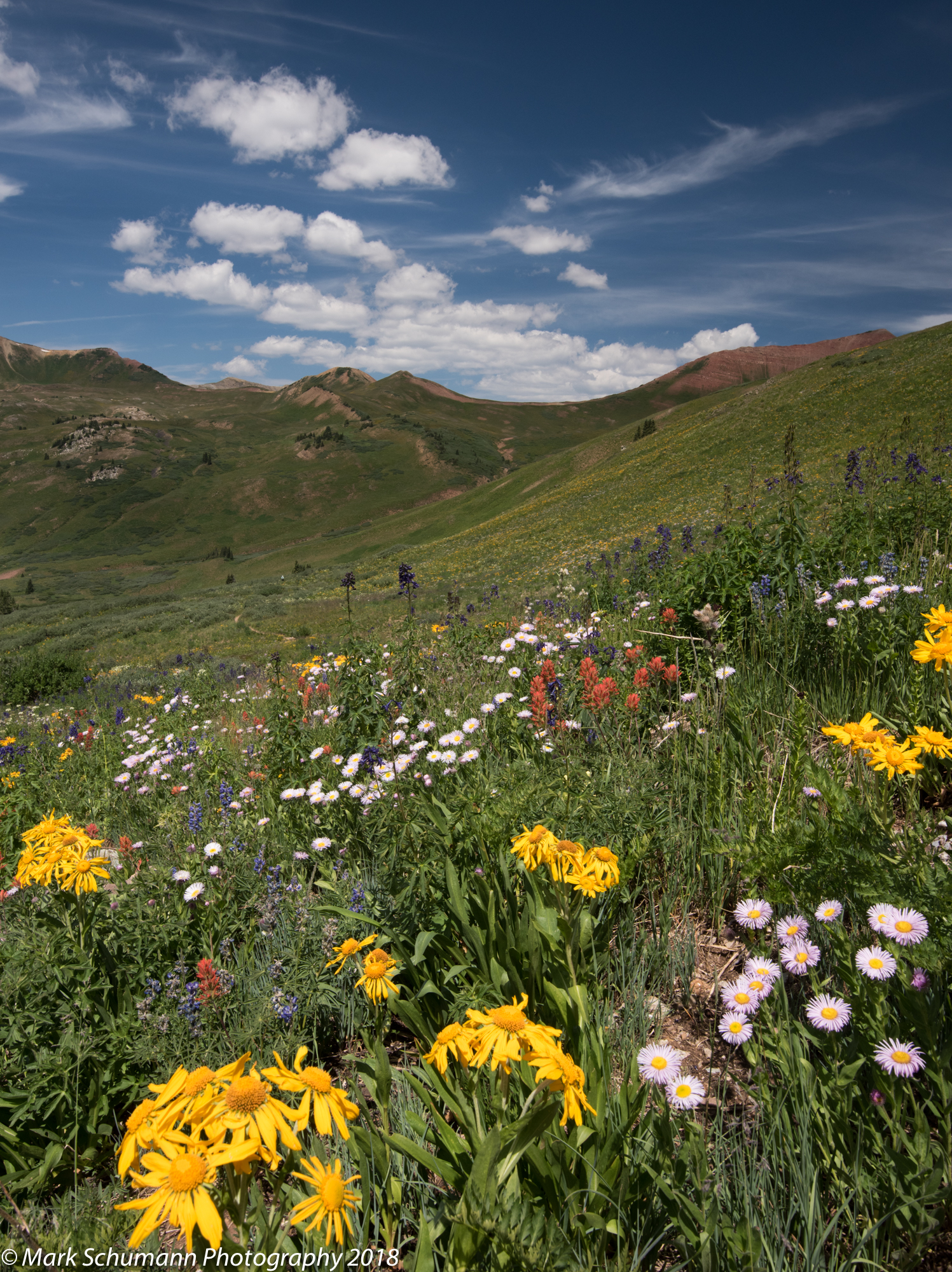 Crested Butte Wildflowers_3_072218.jpg