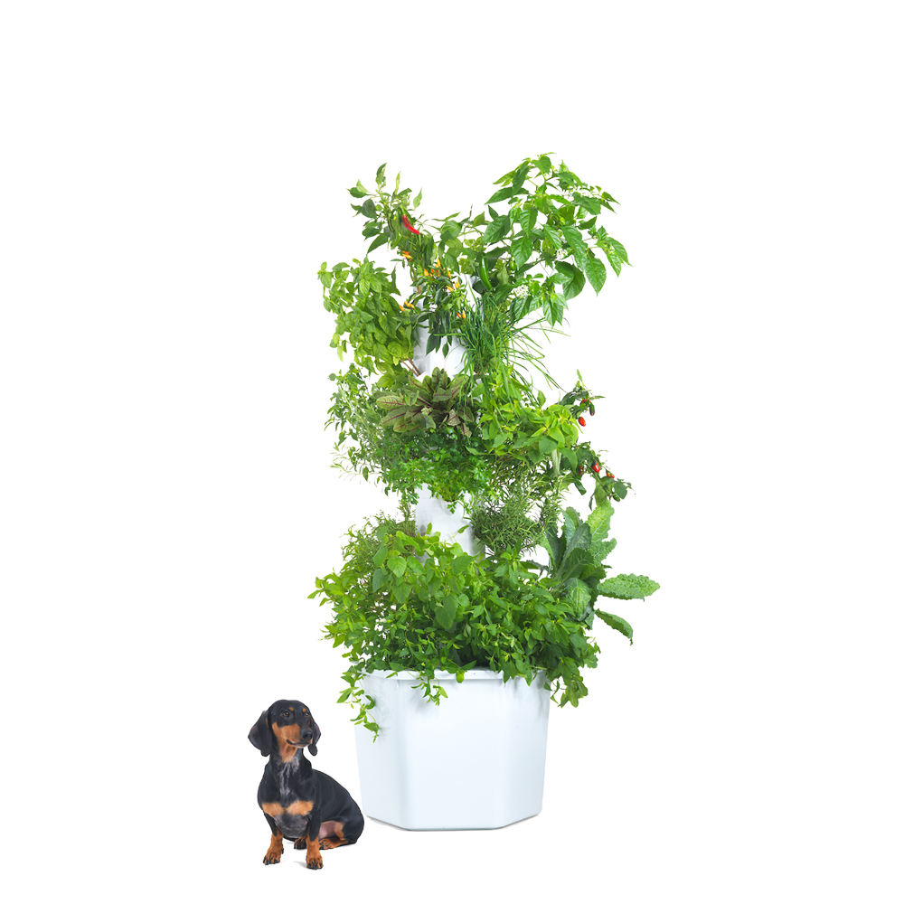 Aerospring Garden Standard - 9 sections, 27 plants$580 SGD