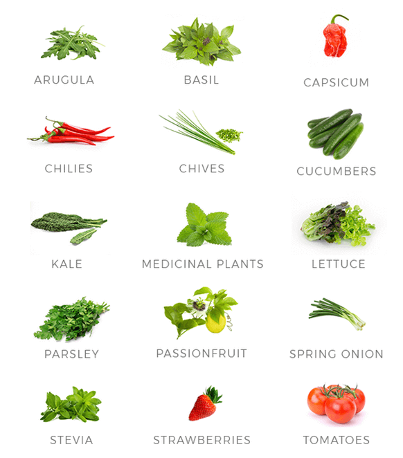 Types of Food to Grow with Aerospring.png