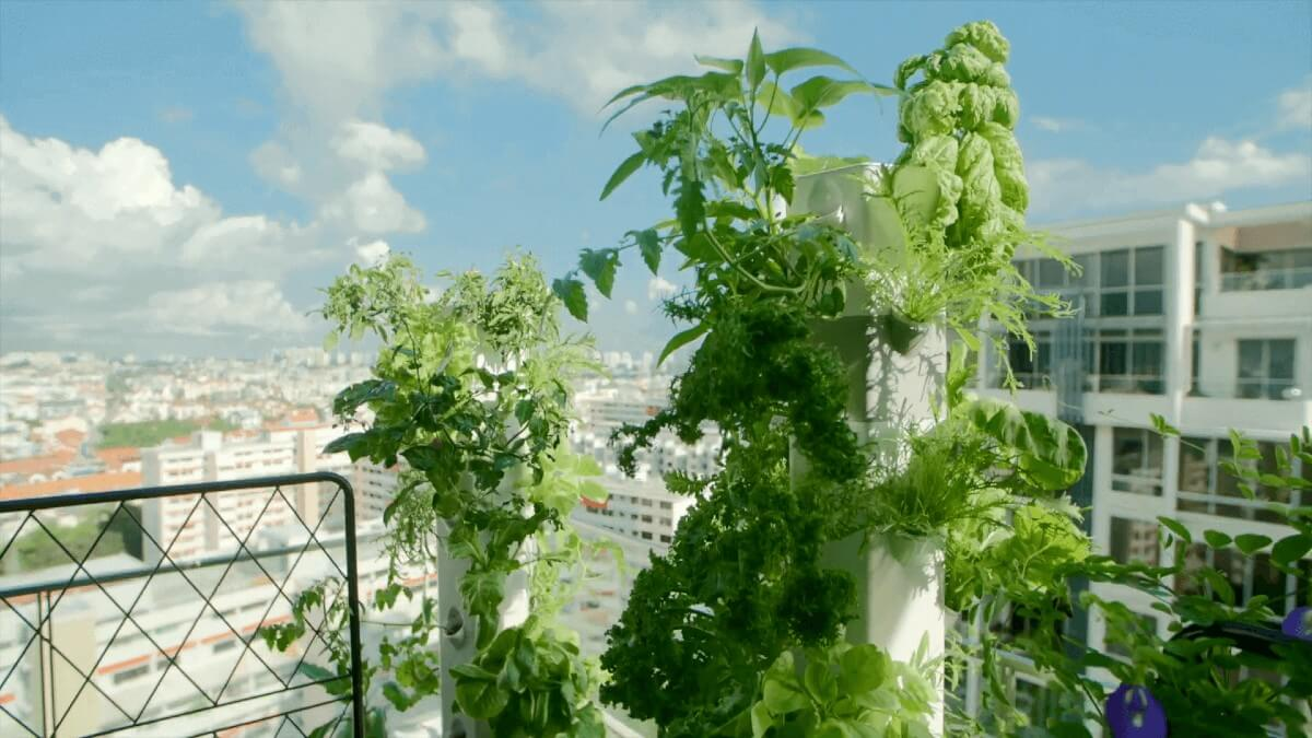 Aerospring Balcony Gardeninng - 1200.jpg