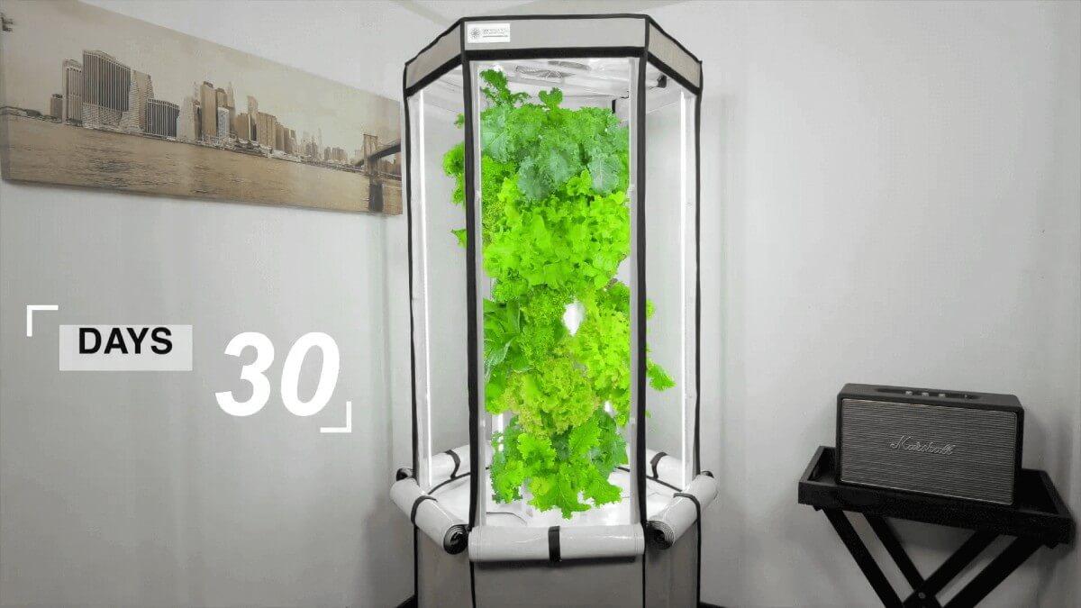 1200 - Aerosrping Indoor Grow Fast.jpg